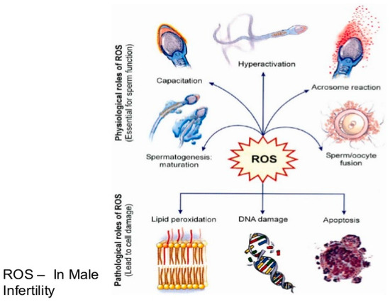 Biomarker sperm fertility market