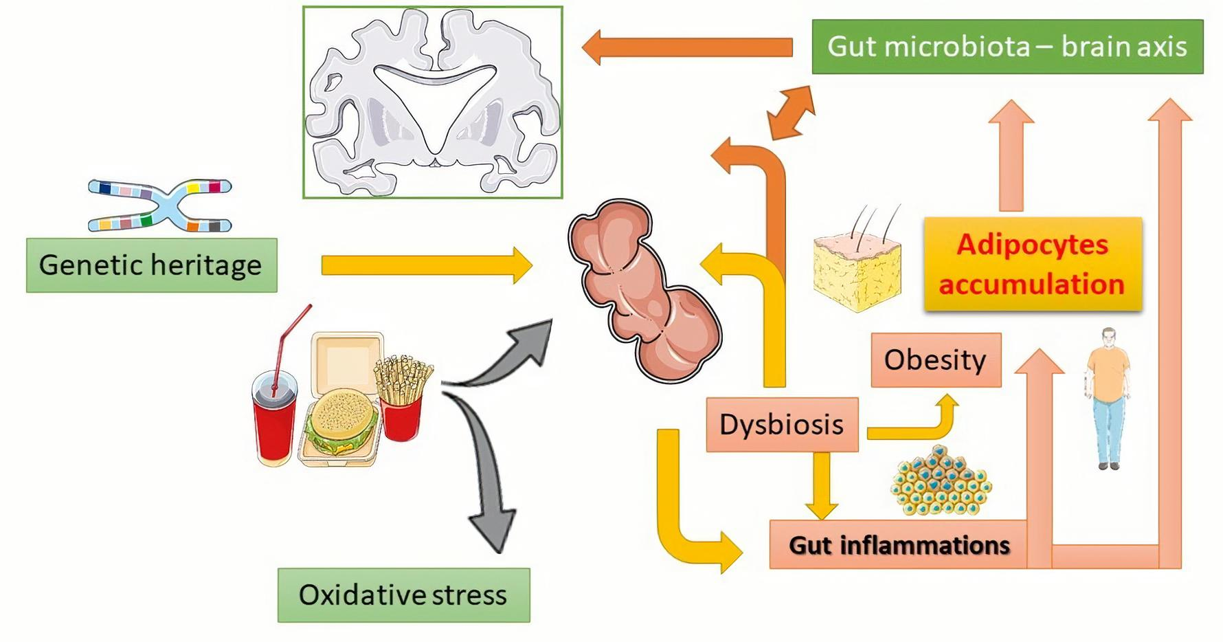 Dysbiosis stress. Dysbiosis of gut microbiota, Warts on hands only