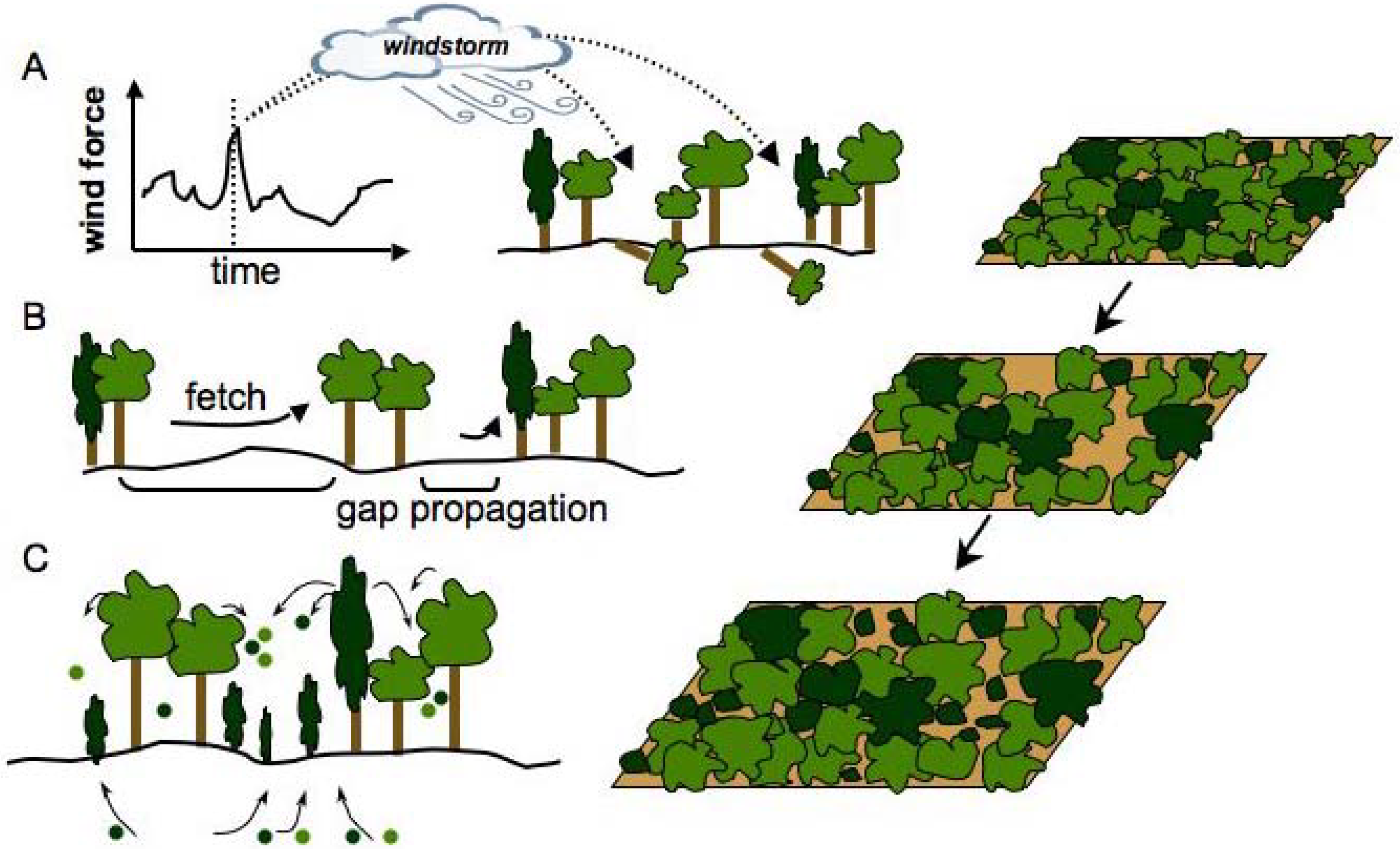 The Social-Ecological Model: A Framework for Prevention