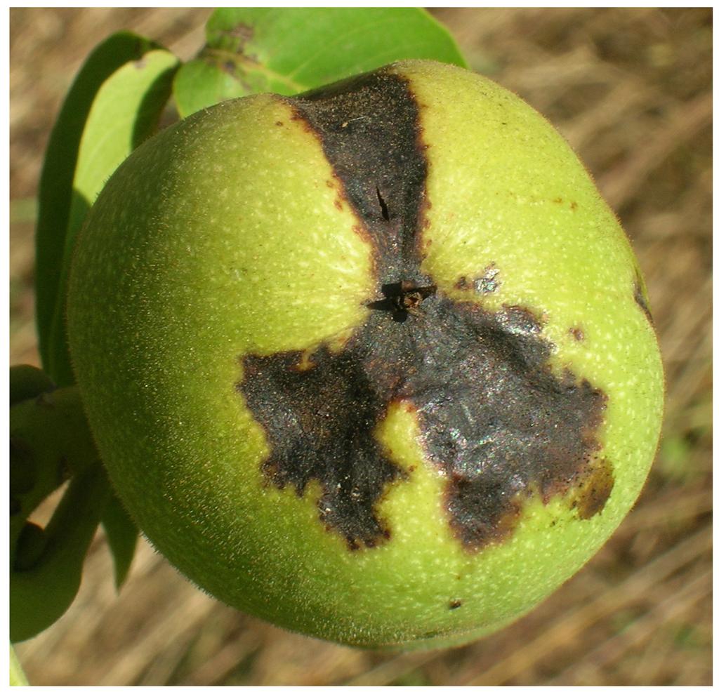 昆虫微生物類等の植物防疫法における規制の有無に関するデータベース
