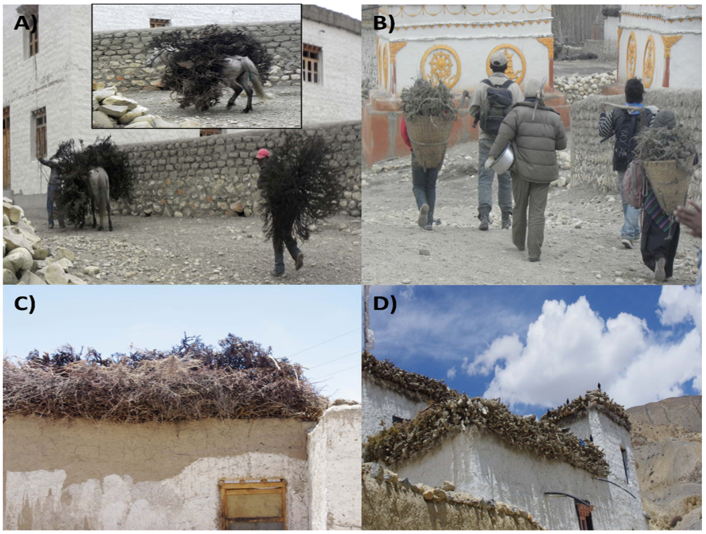 Nepal biodiversity strategy pdf