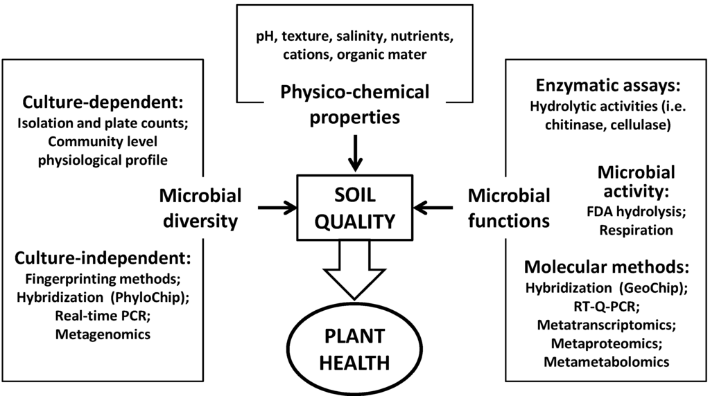 Diversity free full text enhancing soil quality and for Soil quality parameters
