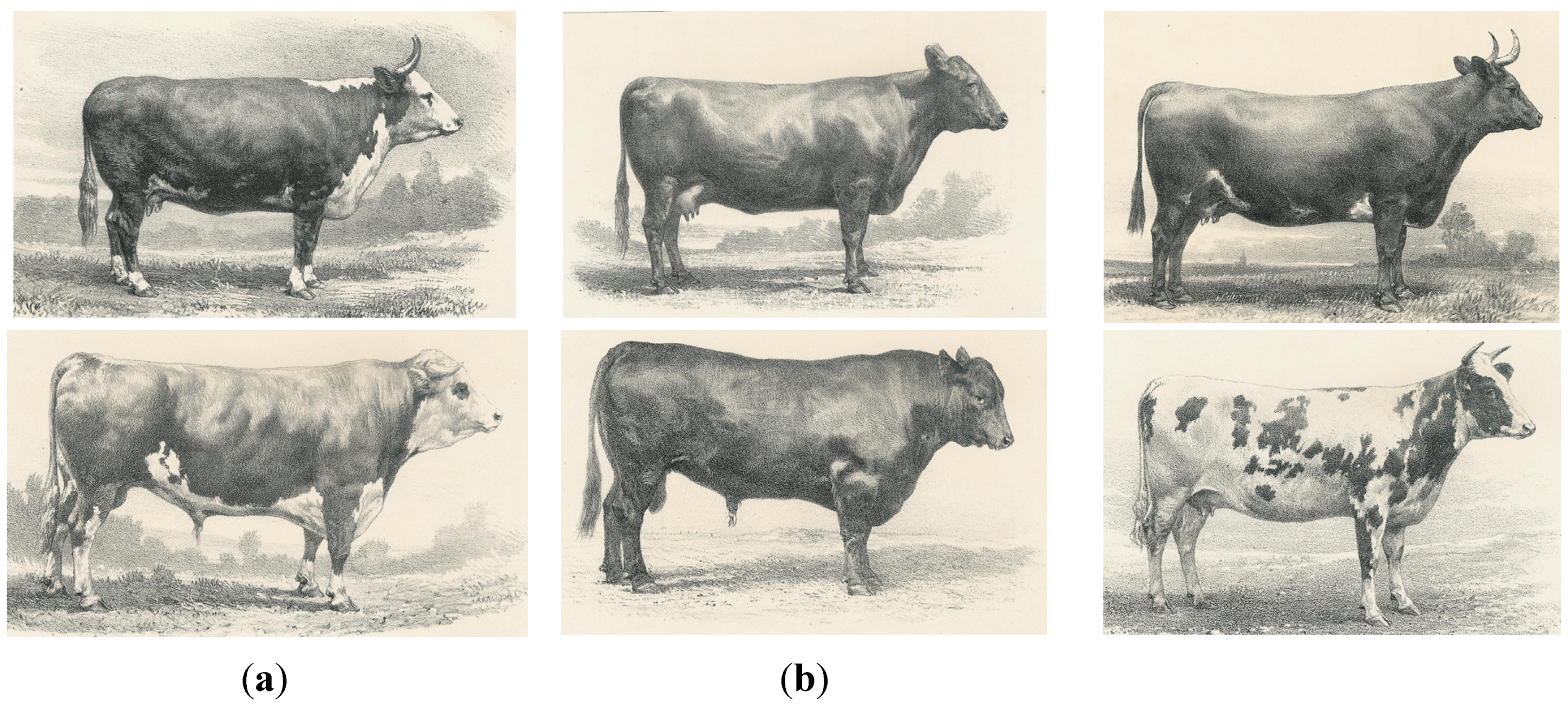 Diversity Free Full Text On The History Of Cattle
