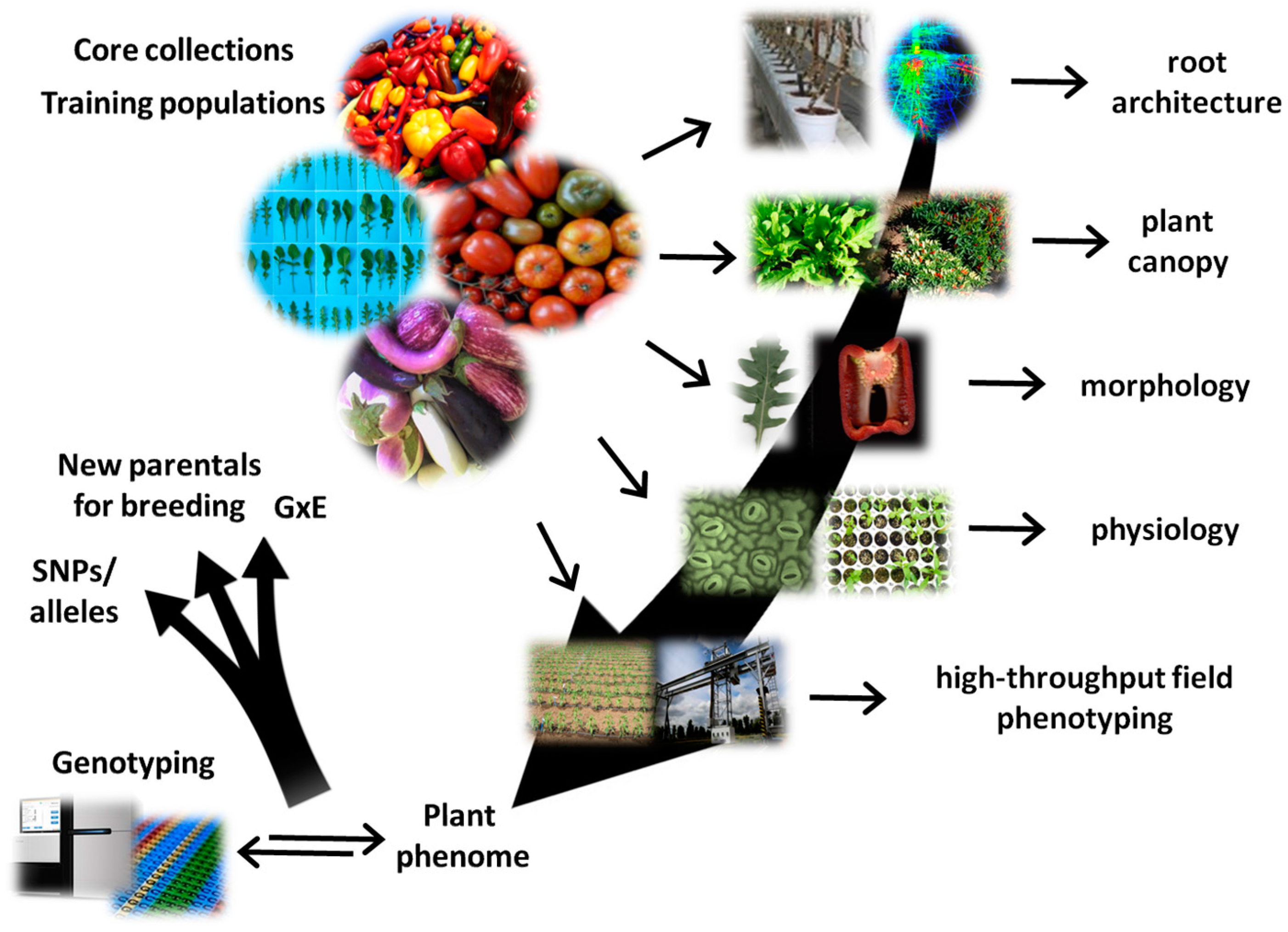 natural variations and genome-wide association studies in crop plants pdf