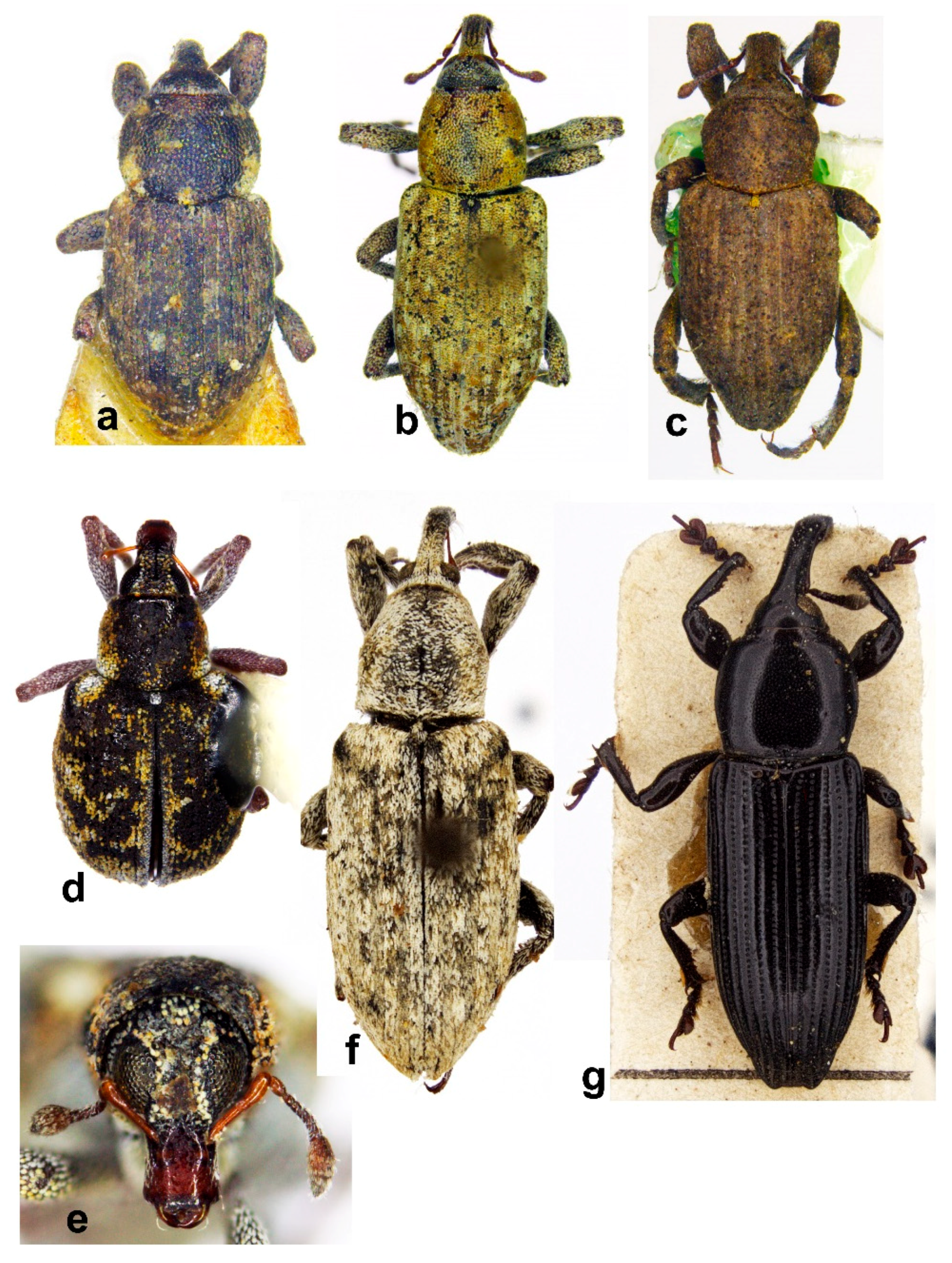 Diversity   Free Full-Text   Review of the Hygrophilous