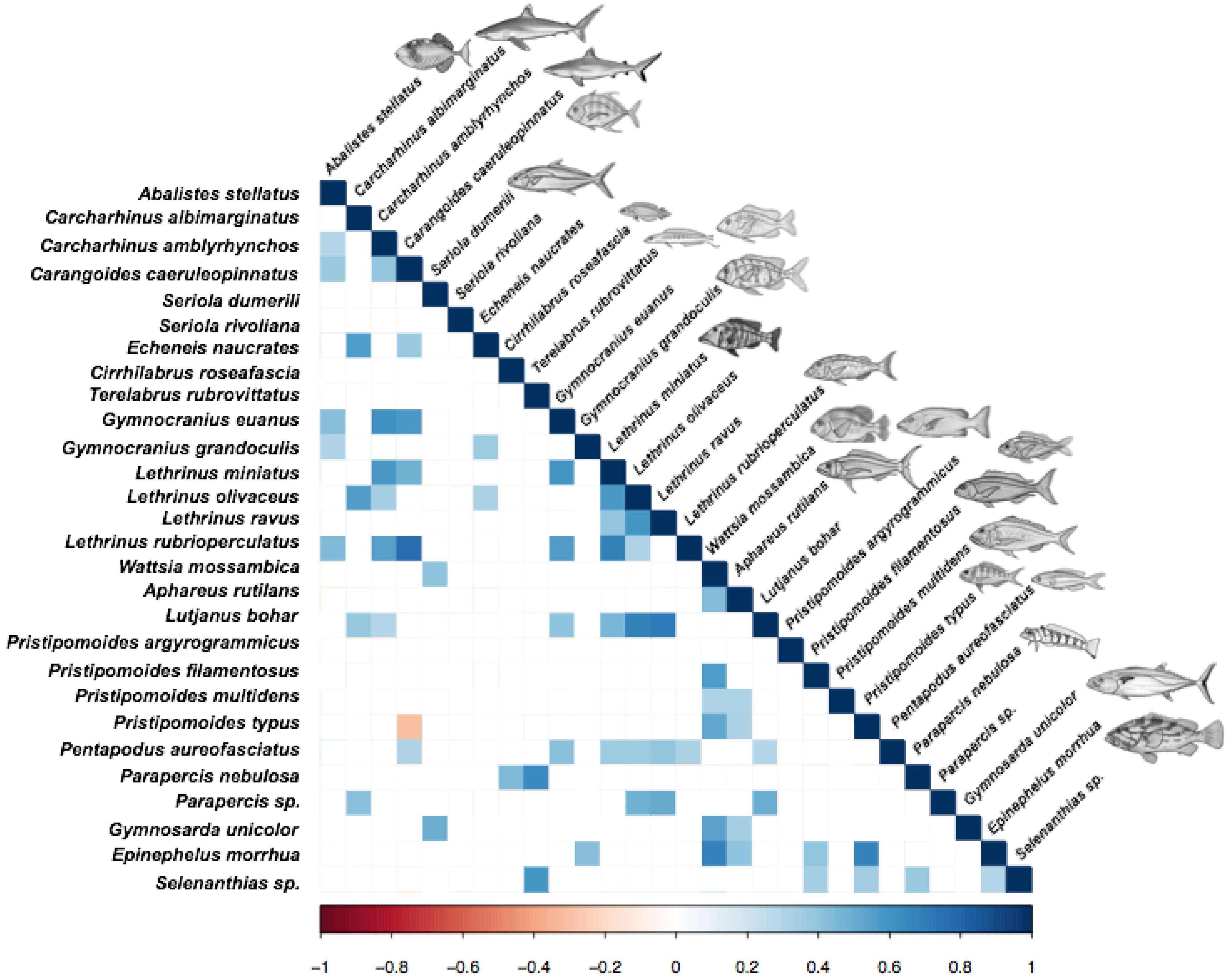 Diversity | Free Full-Text | Deep-Reef Fish Communities of the Great