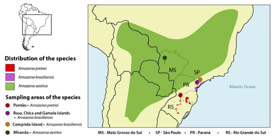 Diversity Free Full Text Molecular Survey Of Pathogens In Wild Amazon Parrot Nestlings Implications For Conservation Html