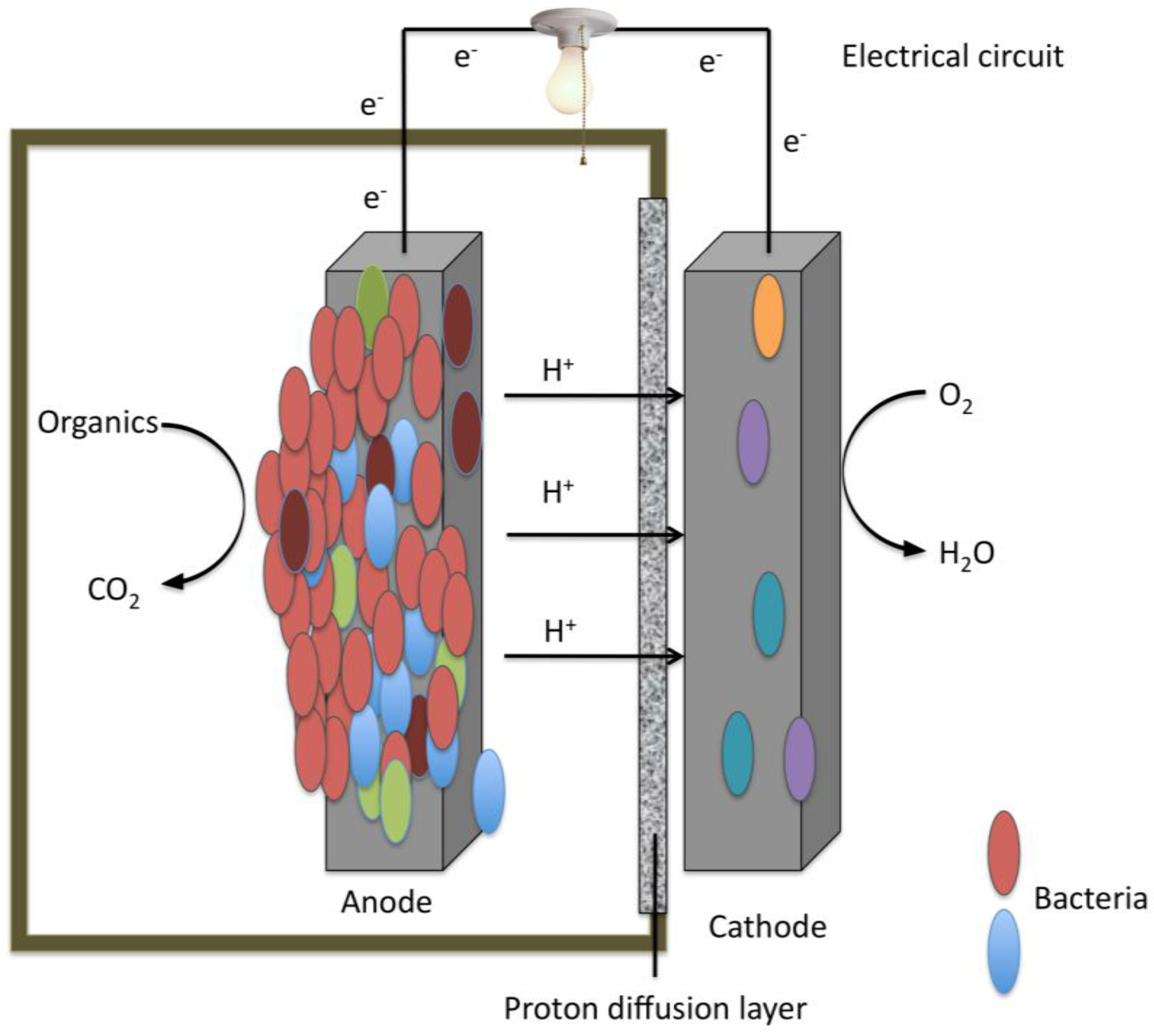 plant microbial fuel cell thesis