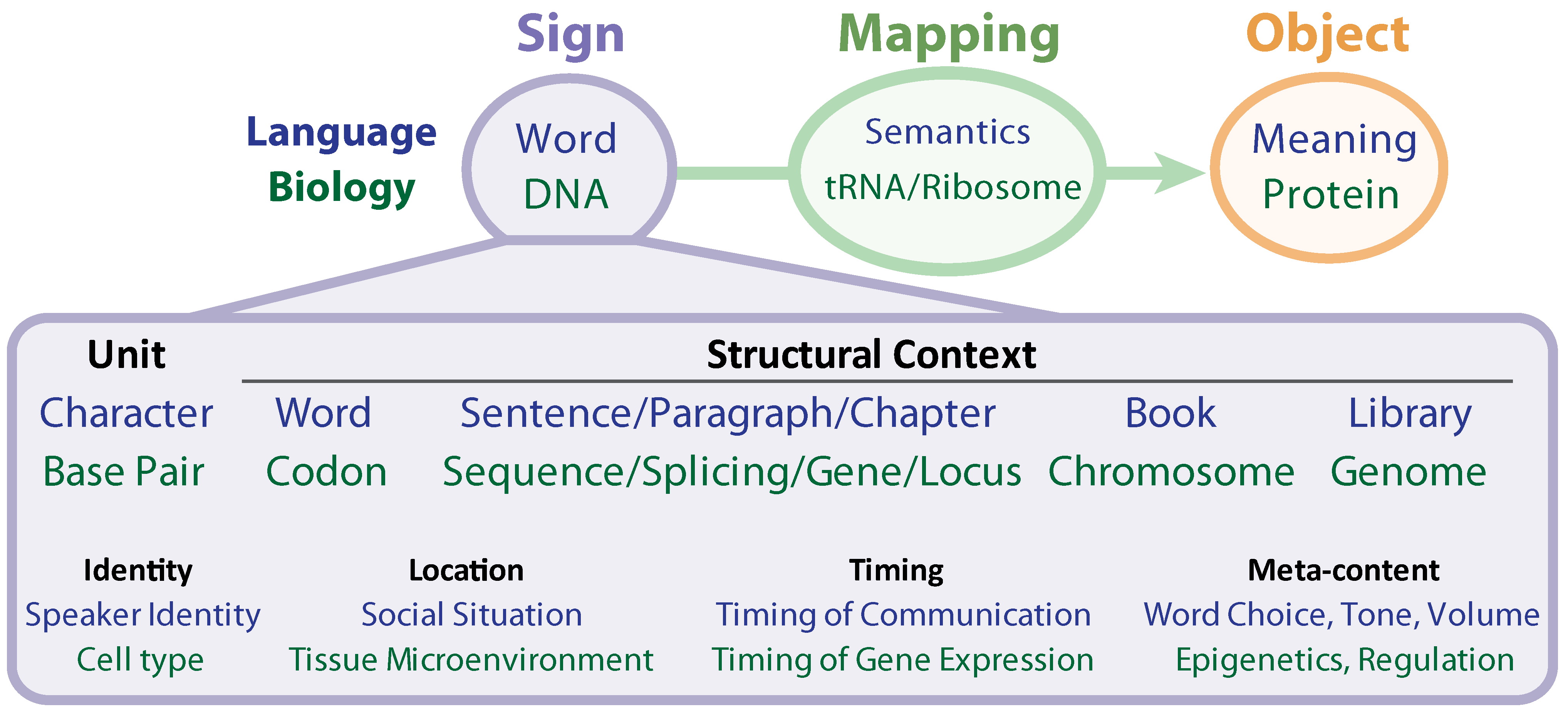 Entropy | Free Full-Text | Biosemiotic Entropy of the Genome