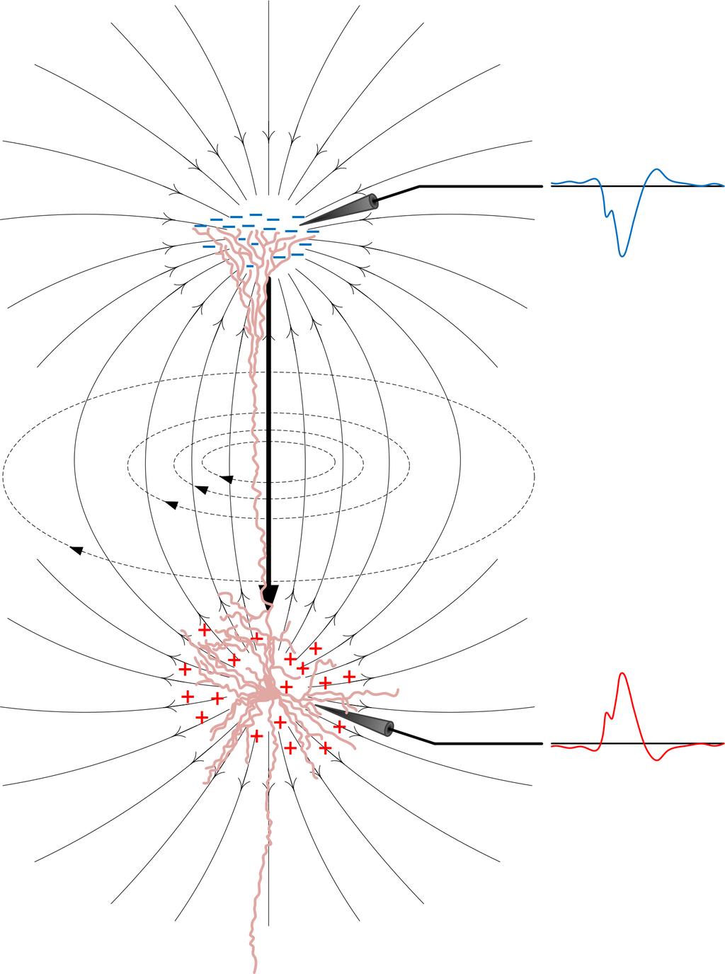 spiking neuron research papers Mechanism of bistability: tonic spiking and bursting in a neuron model andrey shilnikov department of mathematics and statistics, georgia state university, atlanta.