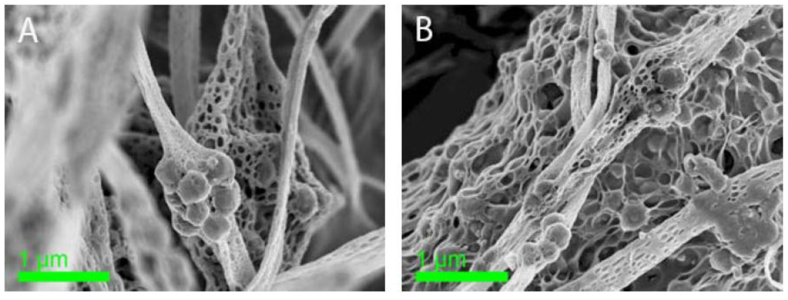Polymer Composite Cellolose : Fibers free full text electrospun zeolite cellulose