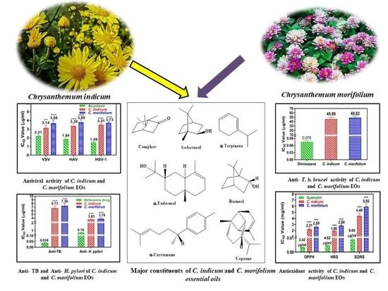 Foods Free Full Text Chrysanthemum Indicum And Chrysanthemum Morifolium Chemical Composition Of Their Essential Oils And Their Potential Use As Natural Preservatives With Antimicrobial And Antioxidant Activities Html
