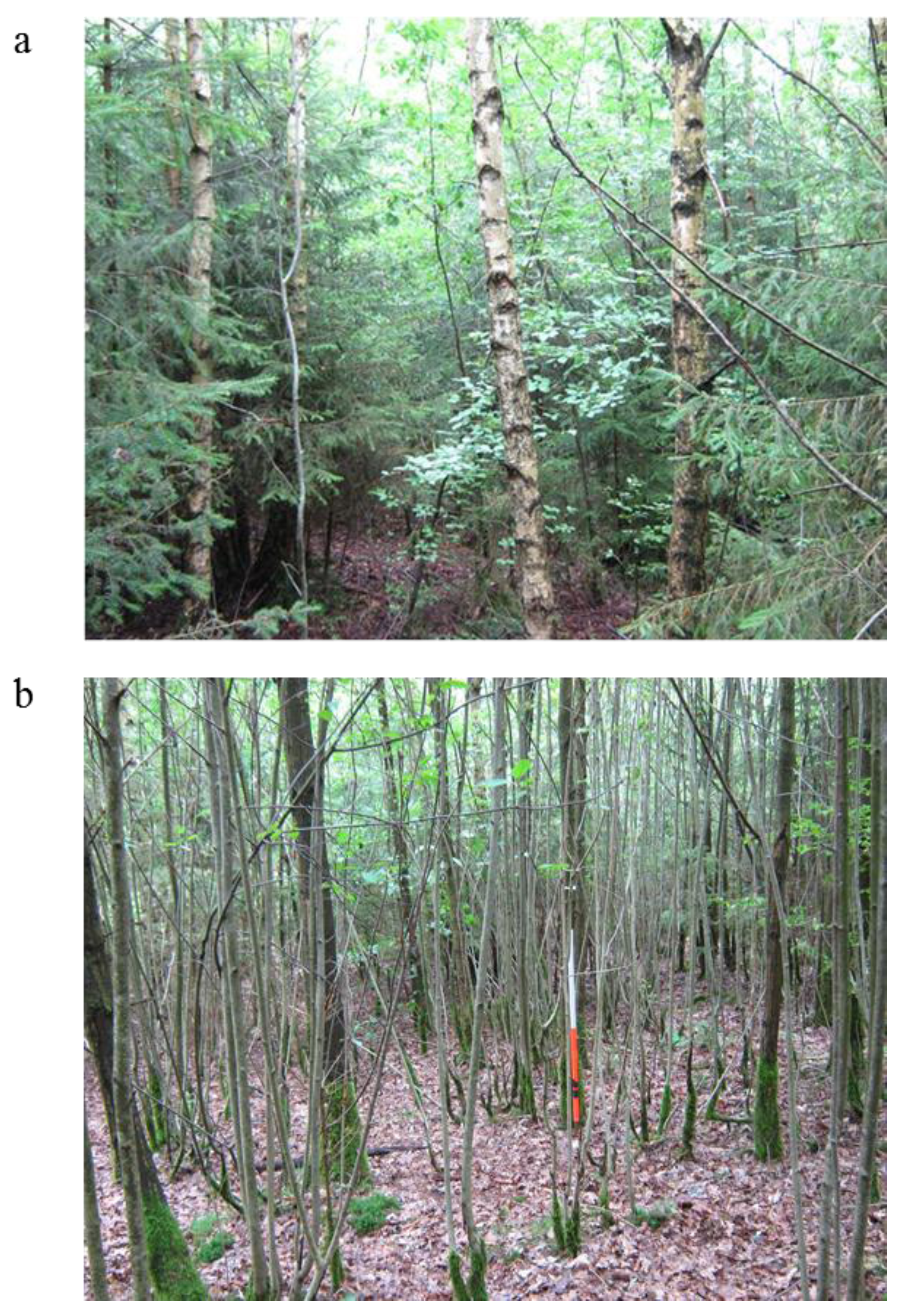 Reforestation is usually to regenerate forests environmental sciences essay