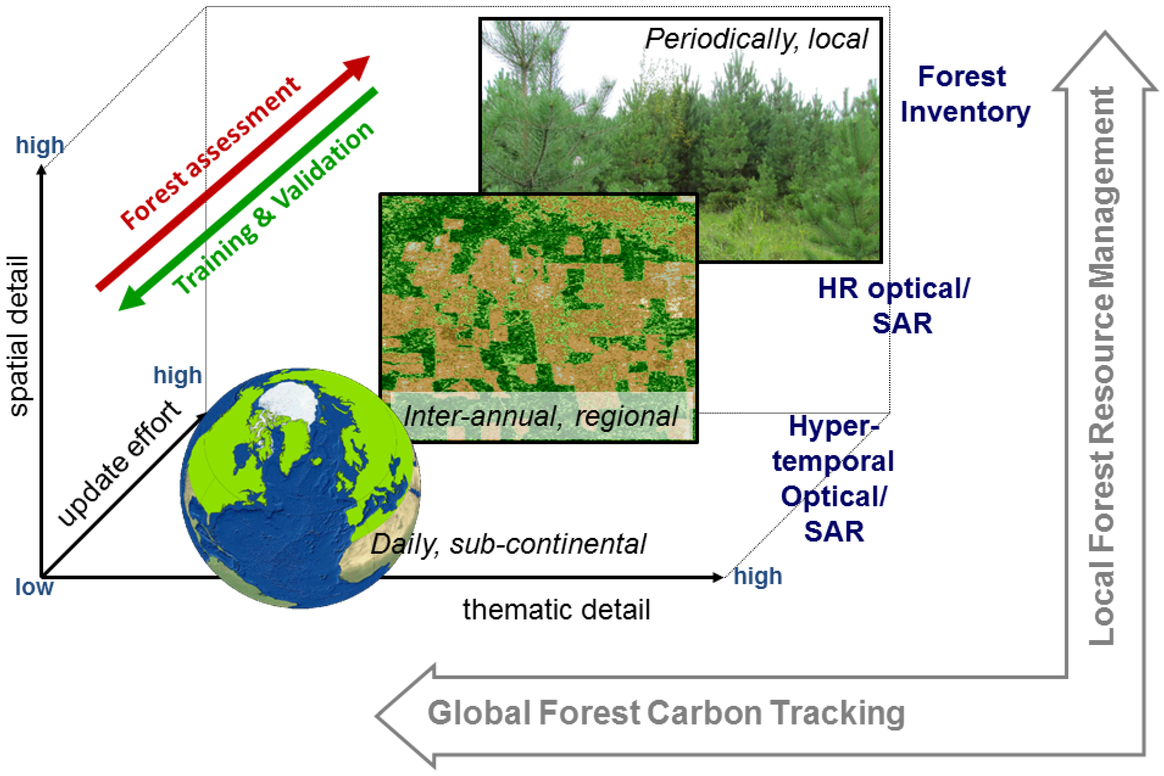 forest in graph