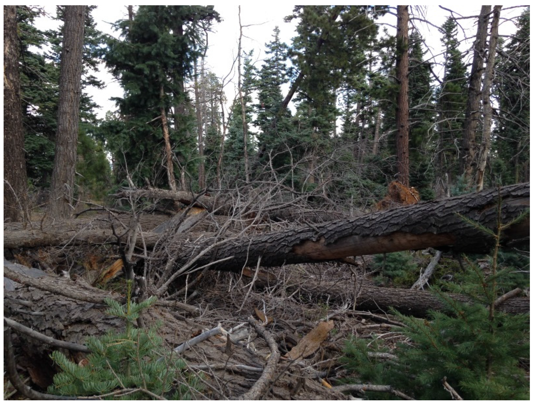 Forests   Free Full-Text   Disturbance Agents and Their Associated