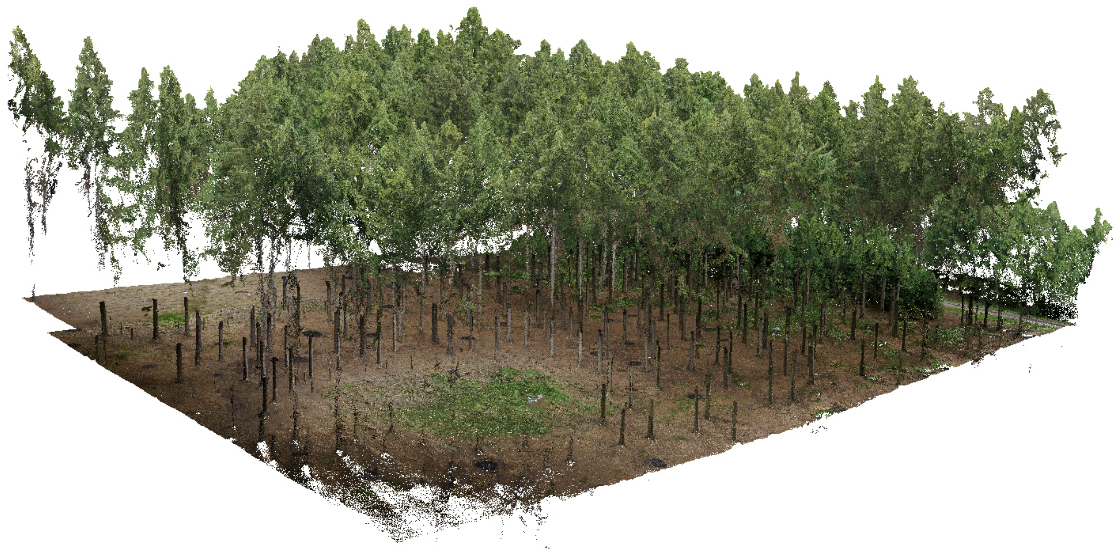 Forests Free Full Text Forest Stand Inventory Based On