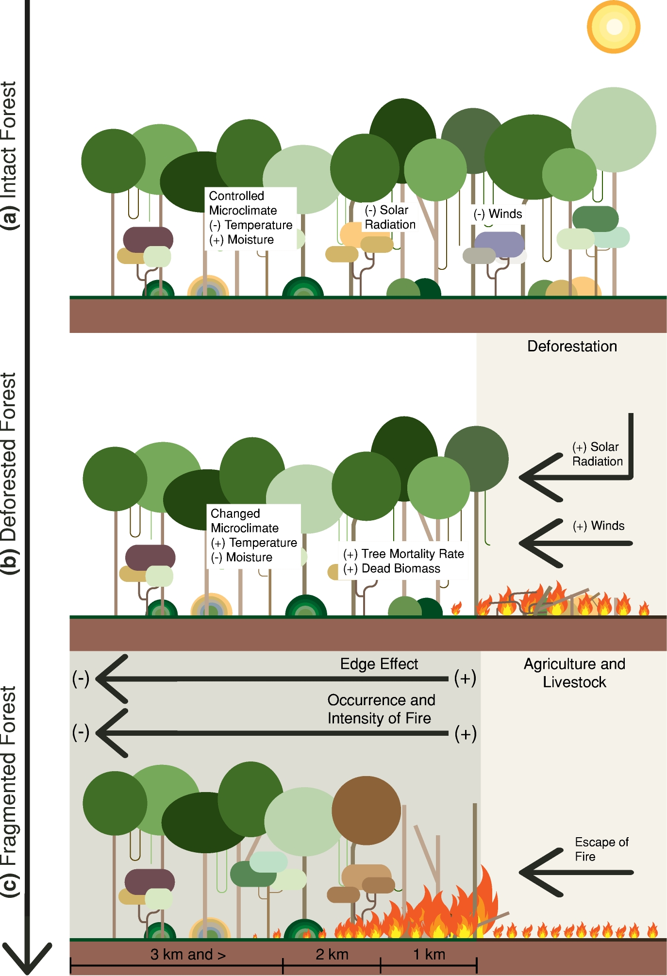 Forests Free Full Text Deforestation Induced