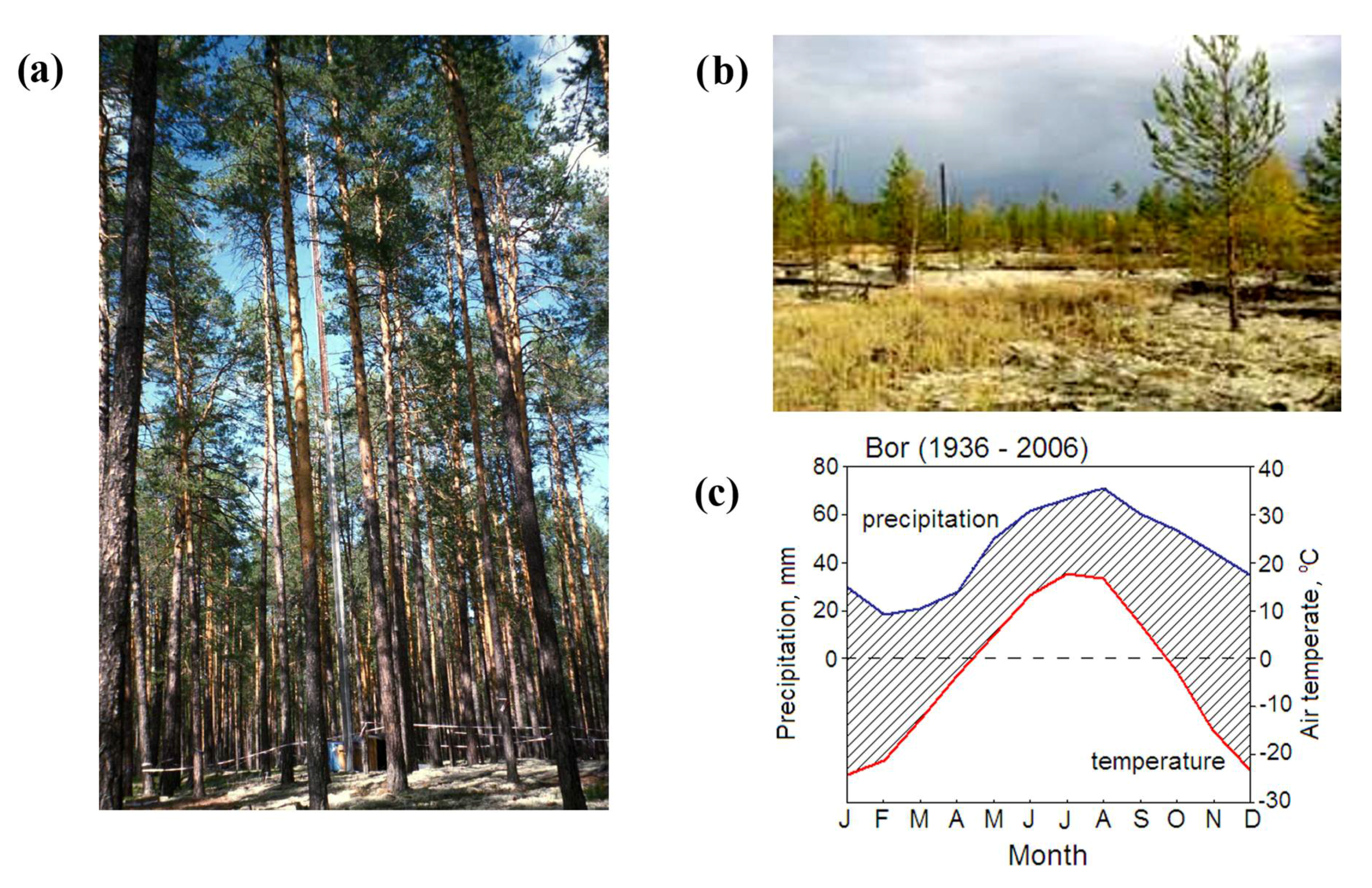 Forests   Free Full-Text   Age-Effect on Intra-Annual δ13C ...