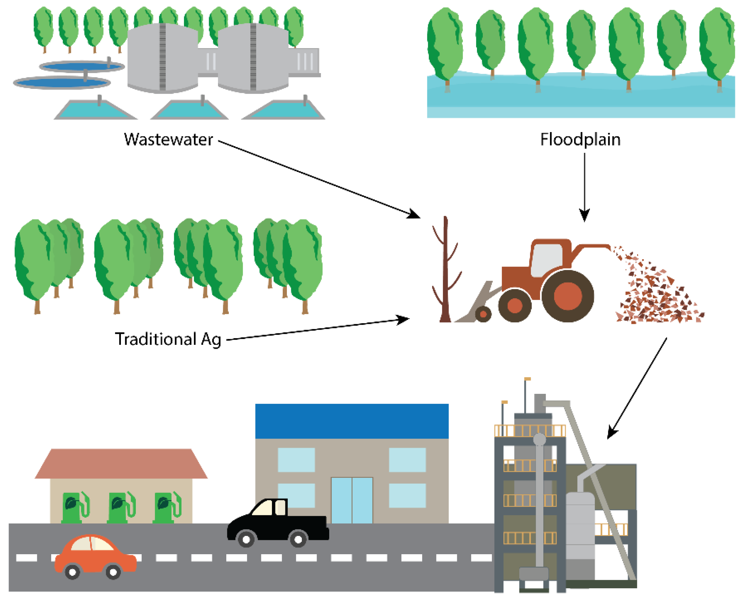 Forests Free Full Text Stakeholder Assessment Of The Feasibility Of Poplar As A Biomass Feedstock And Ecosystem Services Provider In Southwestern Washington Usa Html