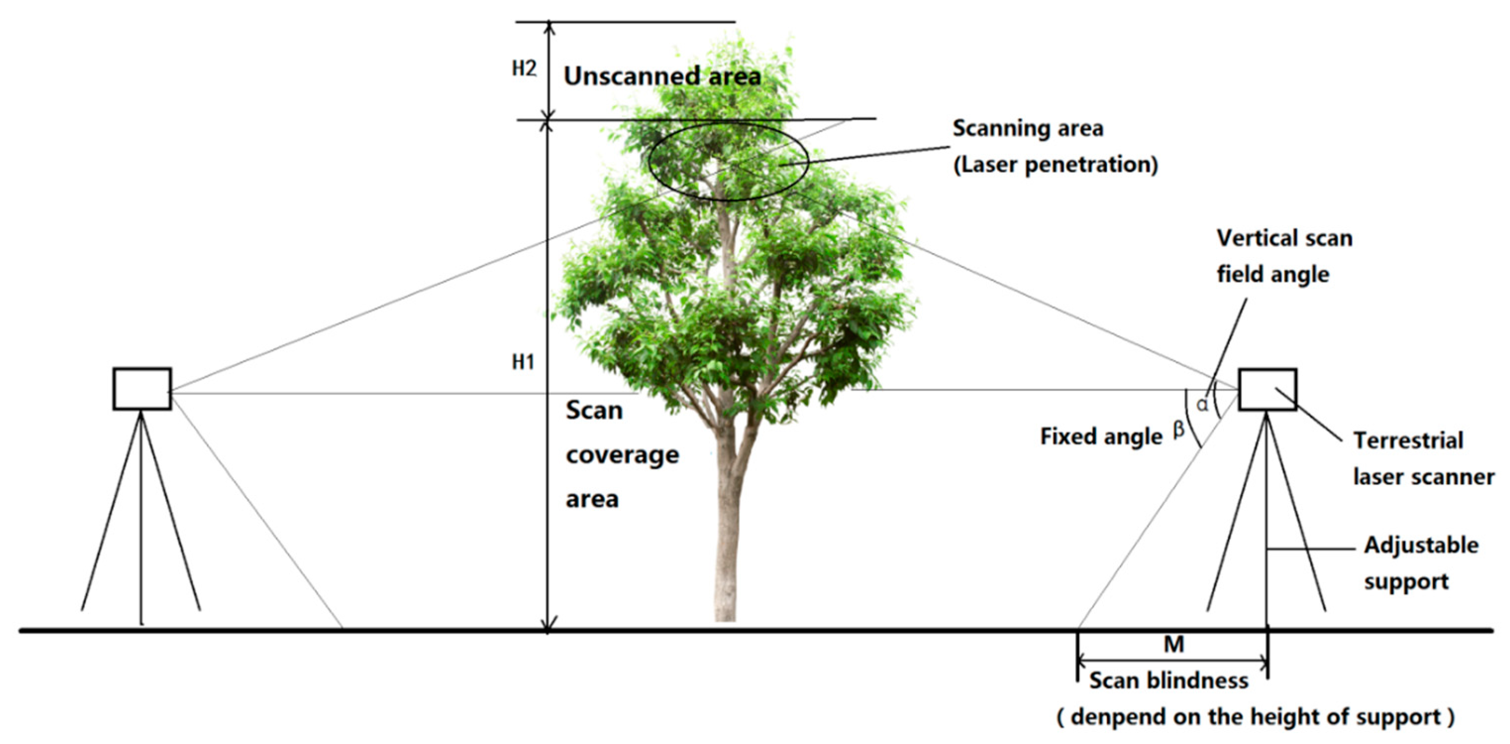 Forests | Free Full-Text | A Novel Tree Height Extraction