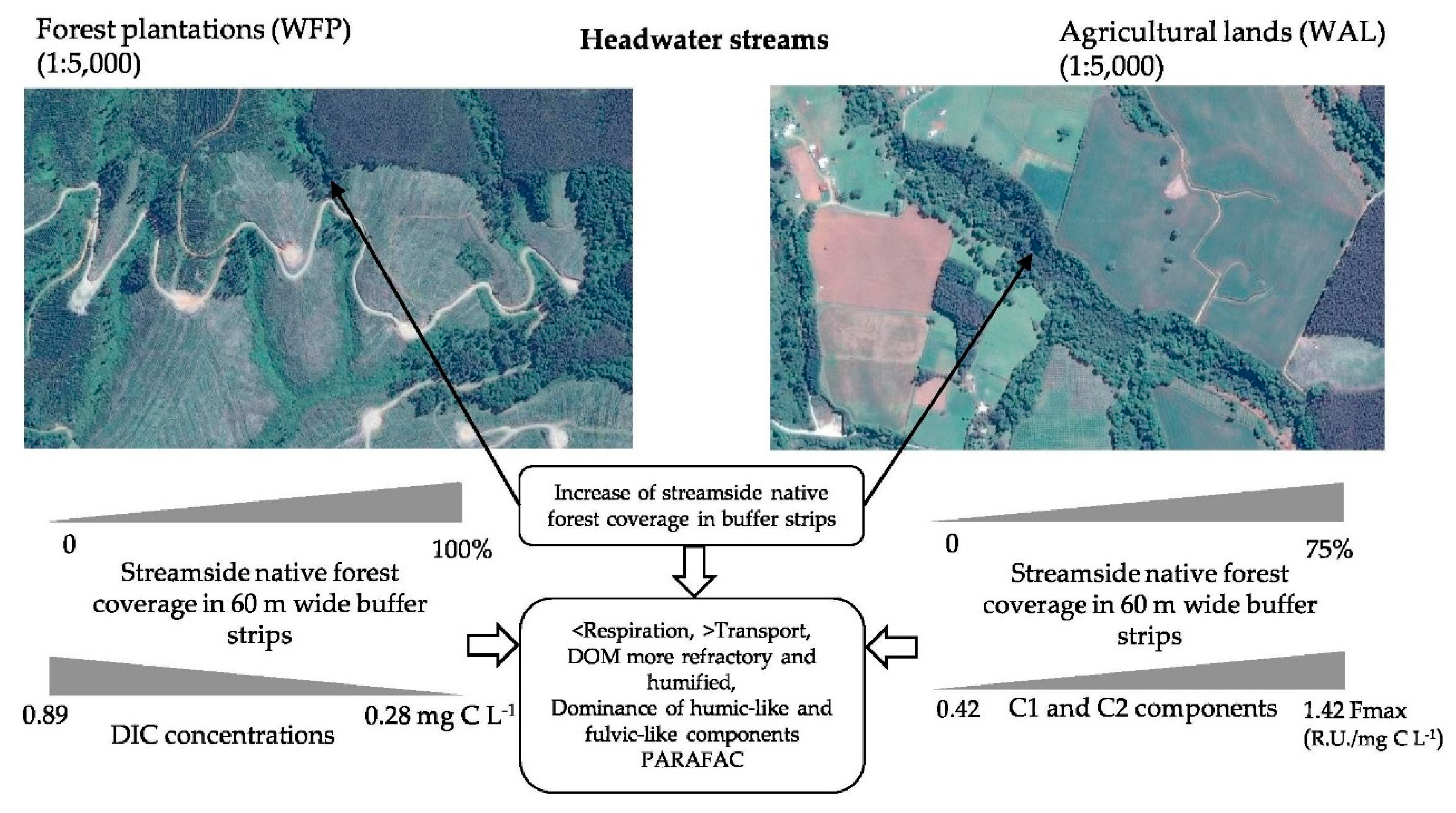 Forests   Free Full-Text   The Role of Streamside Native Forests on