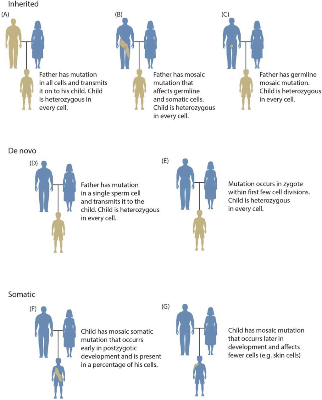 genetic mosaicism - photo #13