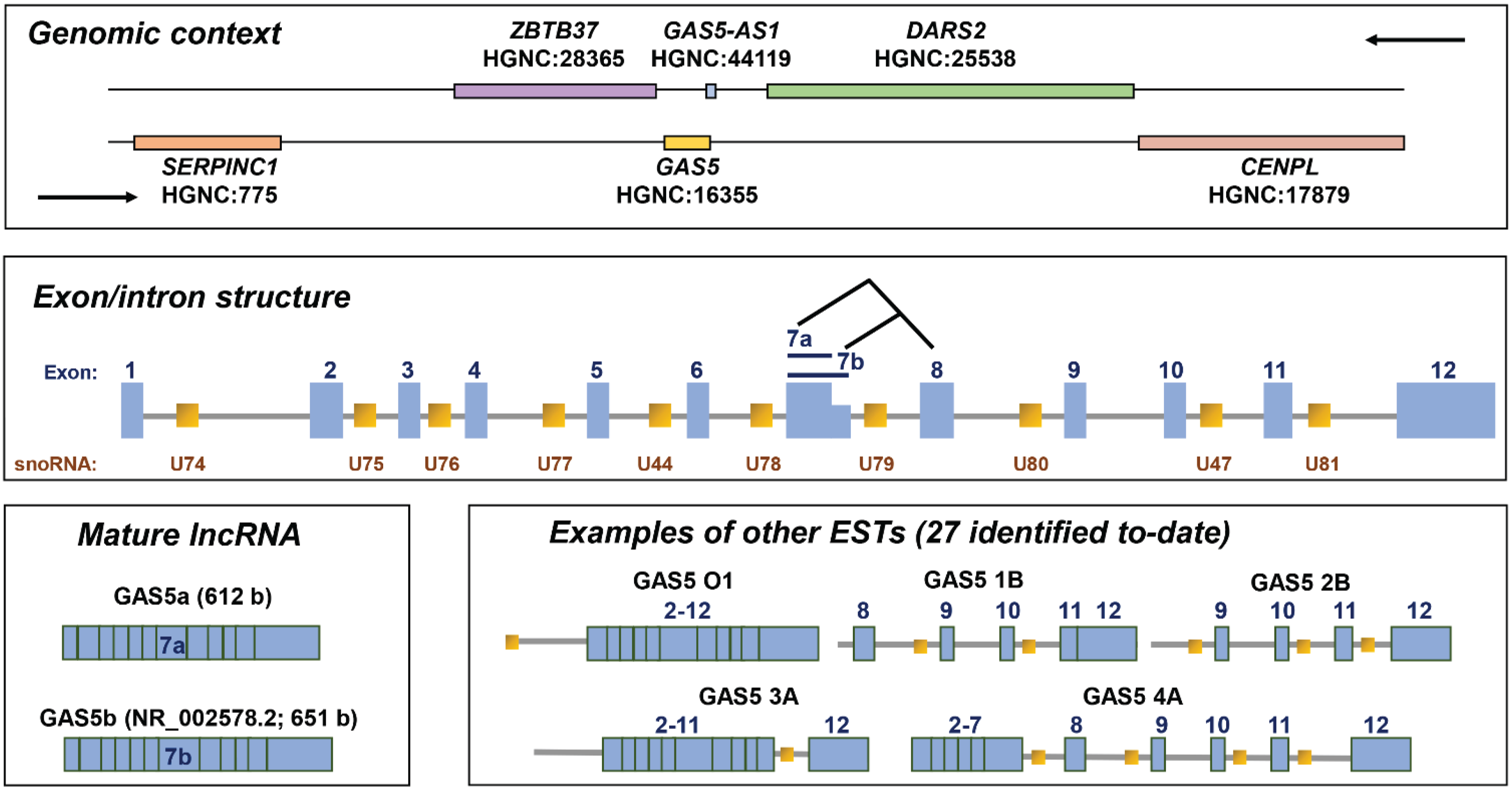 Genes Free Full Text Molecular And Cellular Mechanisms Of Action