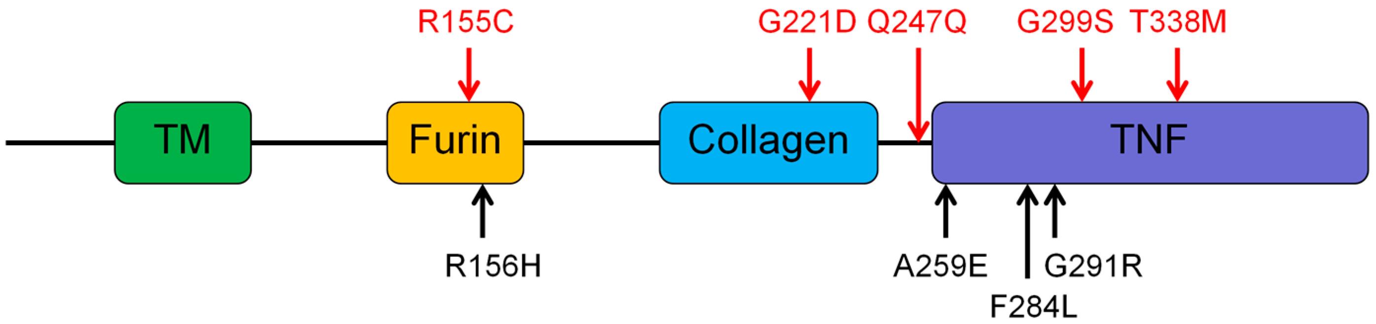 Genes | Free Full-Text | Eight Mutations of Three Genes (EDA, EDAR