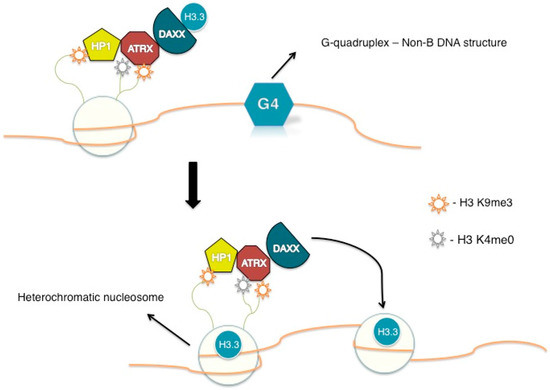 alt associated mutations in histone h3 atrx and daxx Mutations in the atrx/daxx chromatin remodeling complex have been reported in tumors and cell lines that use the alt mechanism, suggesting that atrx may be an alt repressor we show here that knockout or knockdown of atrx in mortal cells or immortal telomerase-positive cells is insufficient to activate alt.