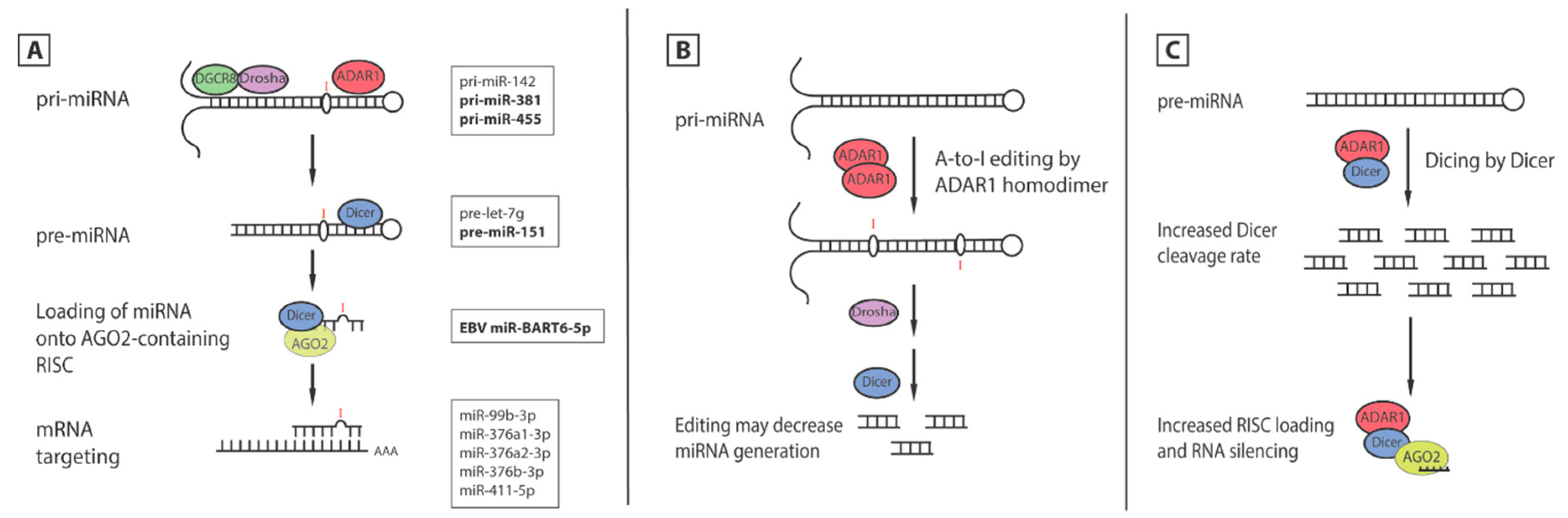 Functions of the RNA Editing Enzyme ADAR1 and Their Relevance to Human Diseases