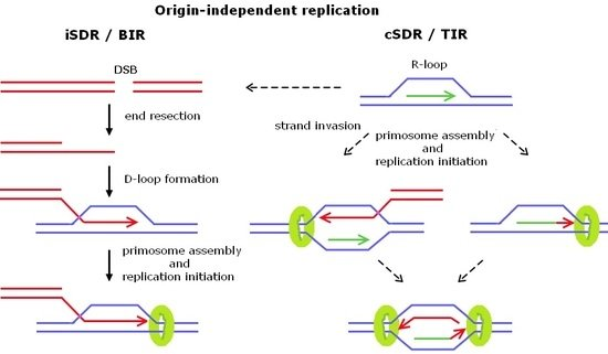 semiconservative replication involves a template what is the template.html