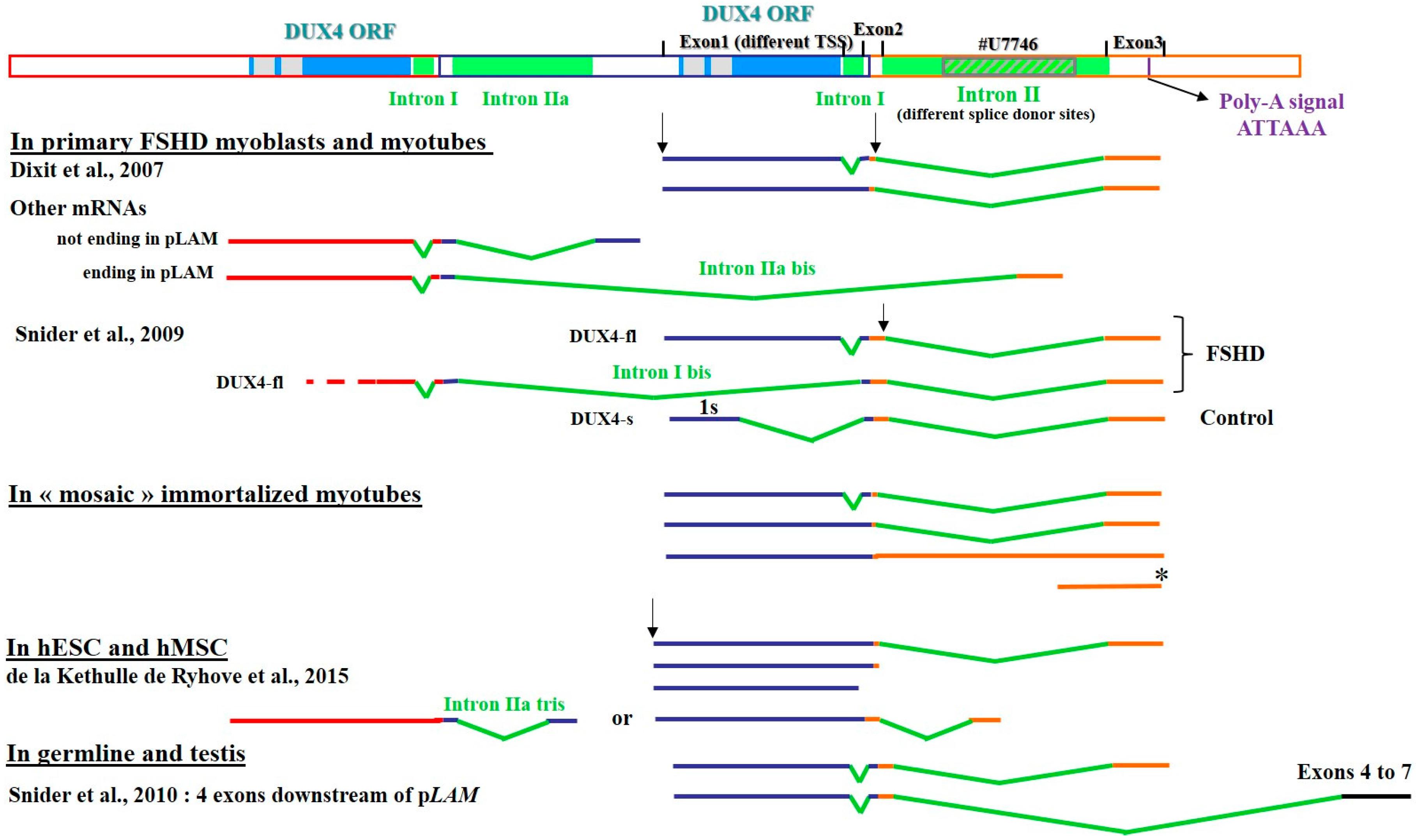 Genes   Free Full-Text   Antisense Oligonucleotides Used to