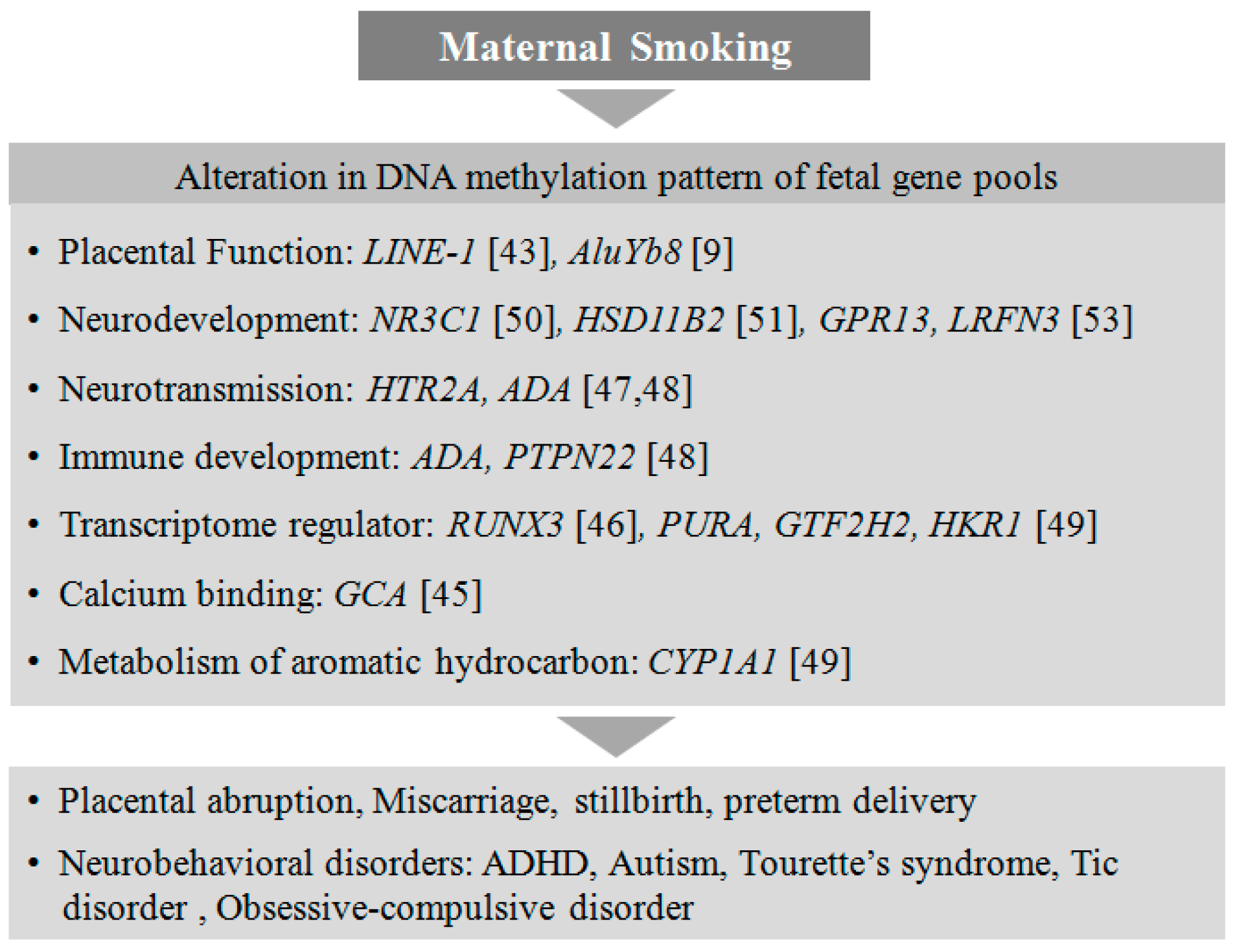 Genes | Free Full-Text | Maternal Factors that Induce Epigenetic ...