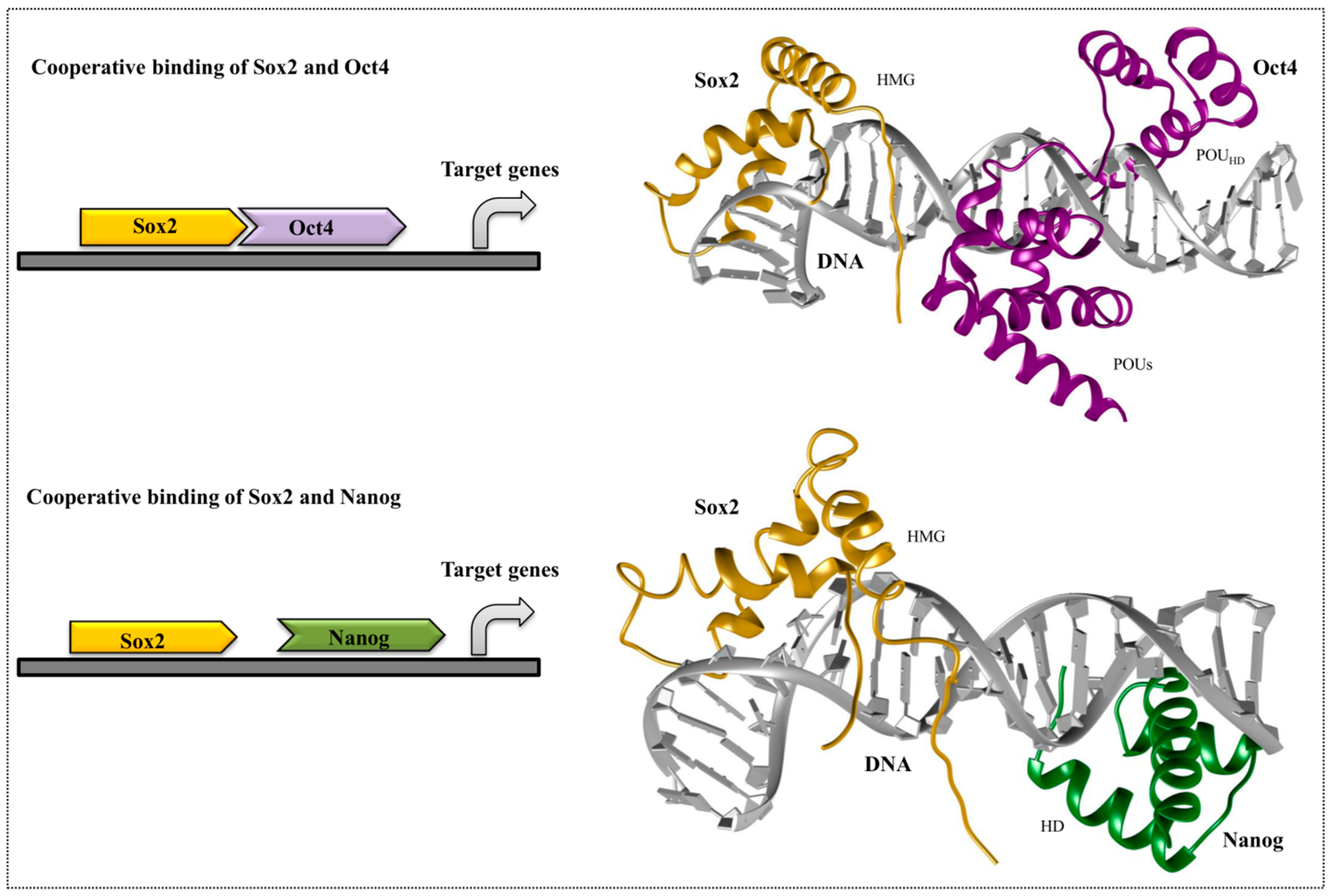 Genes | Free Full-Text | Proteins Recognizing DNA: Structural ...