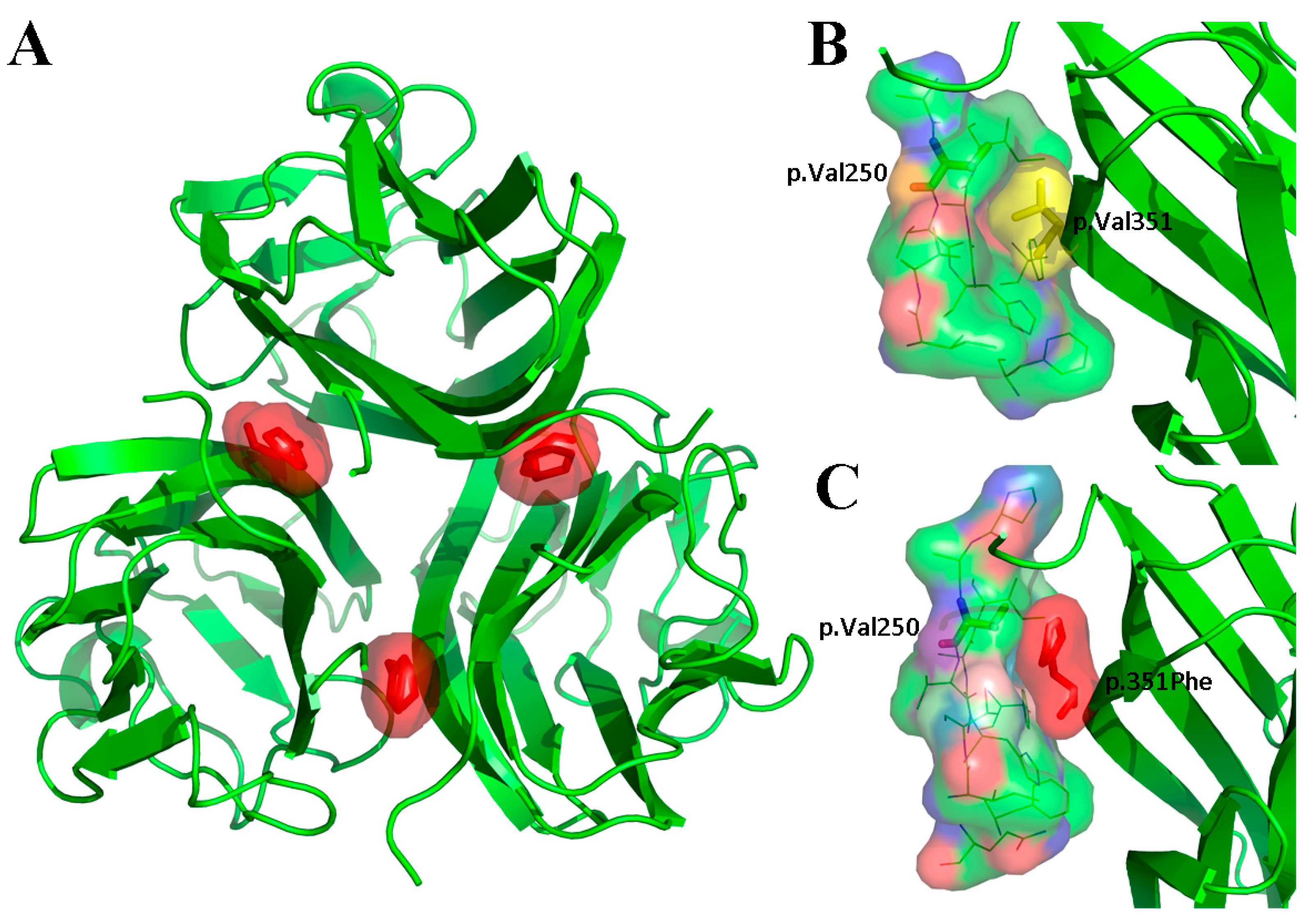 Genes | Free Full-Text | Novel EDA or EDAR Mutations Identified in
