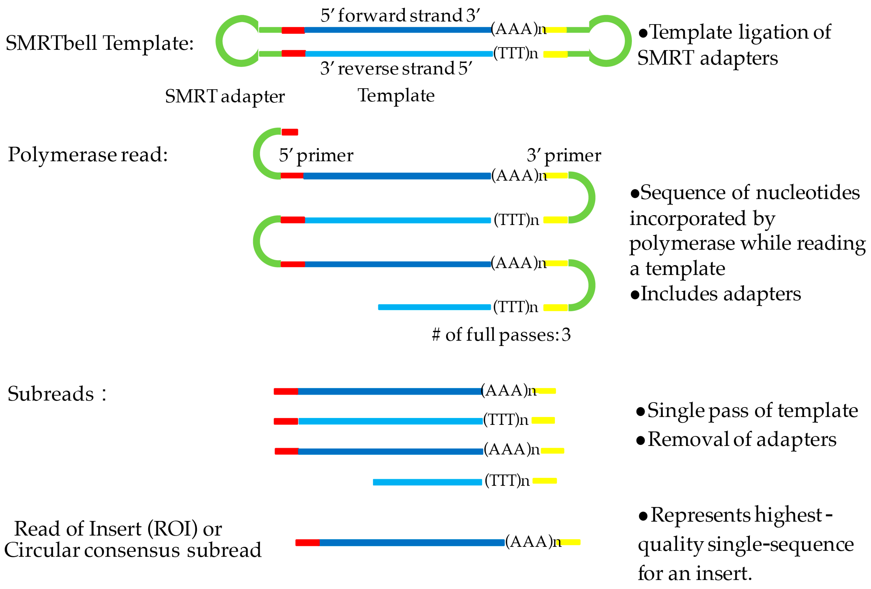 Genes Free Full Text Isoform Sequencing And State Of Art