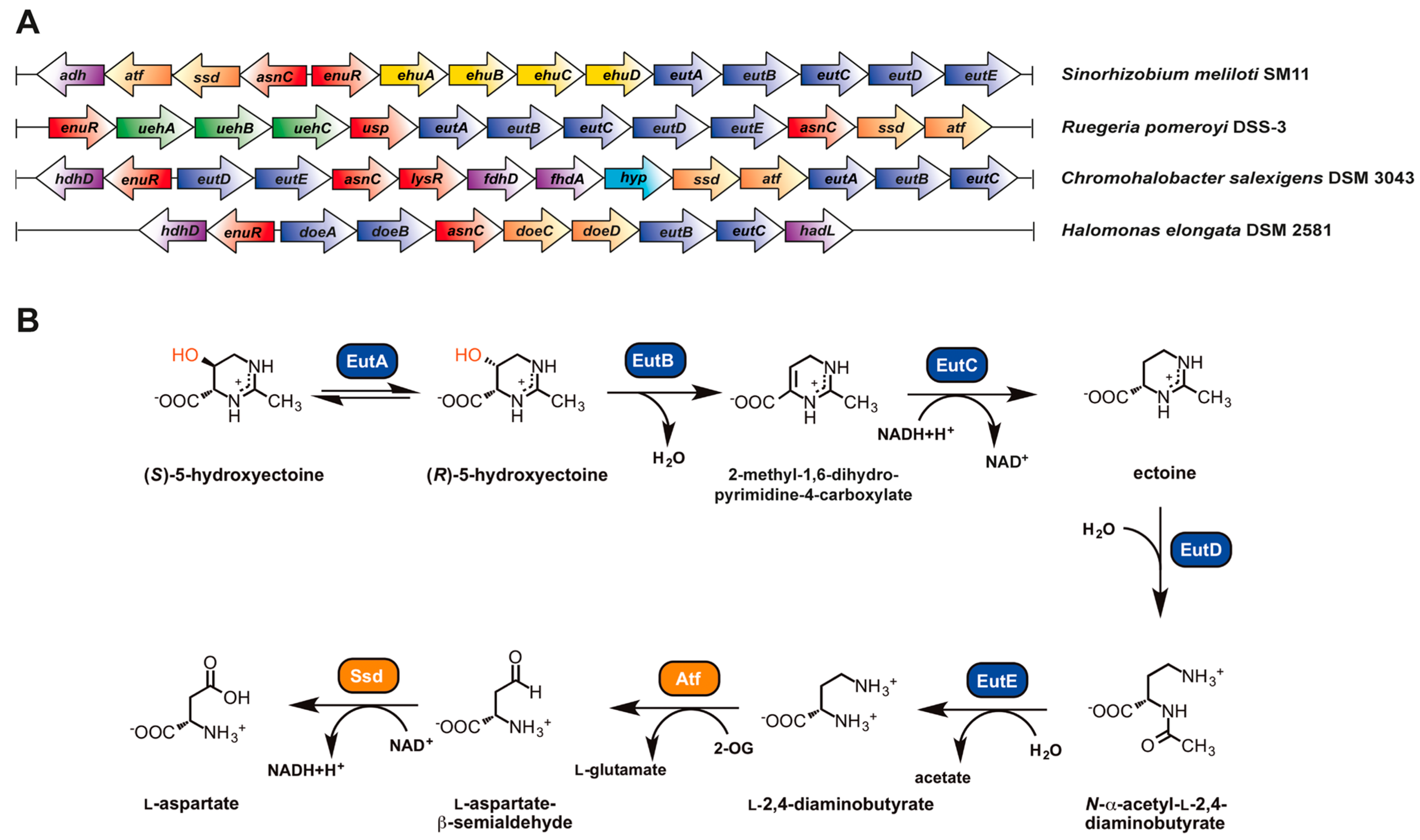 Genes | Free Full-Text | Role of the Extremolytes Ectoine