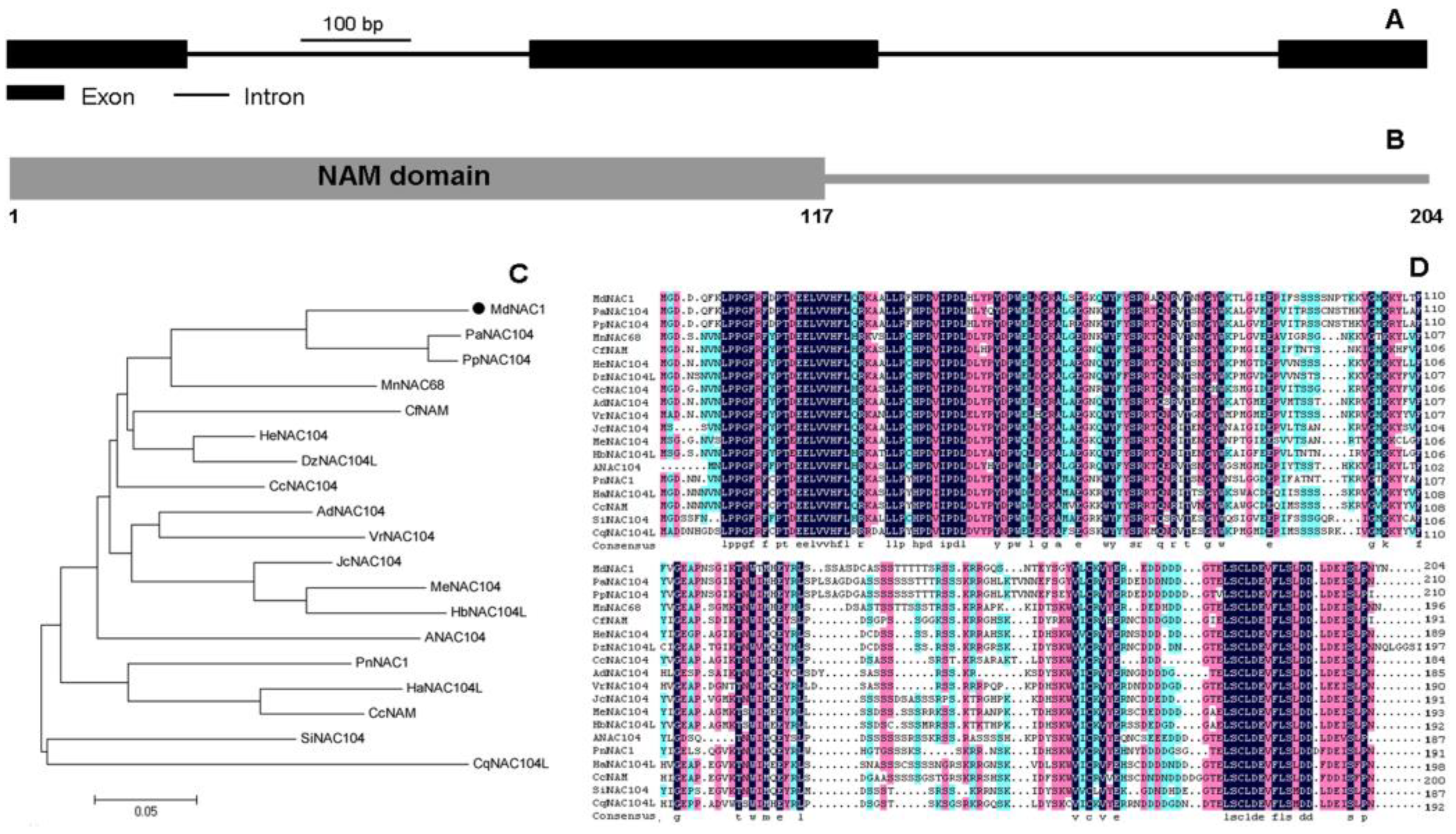 Study Genes Dwarf Environment In >> Genes Free Full Text Overexpression Of A Novel Apple Nac