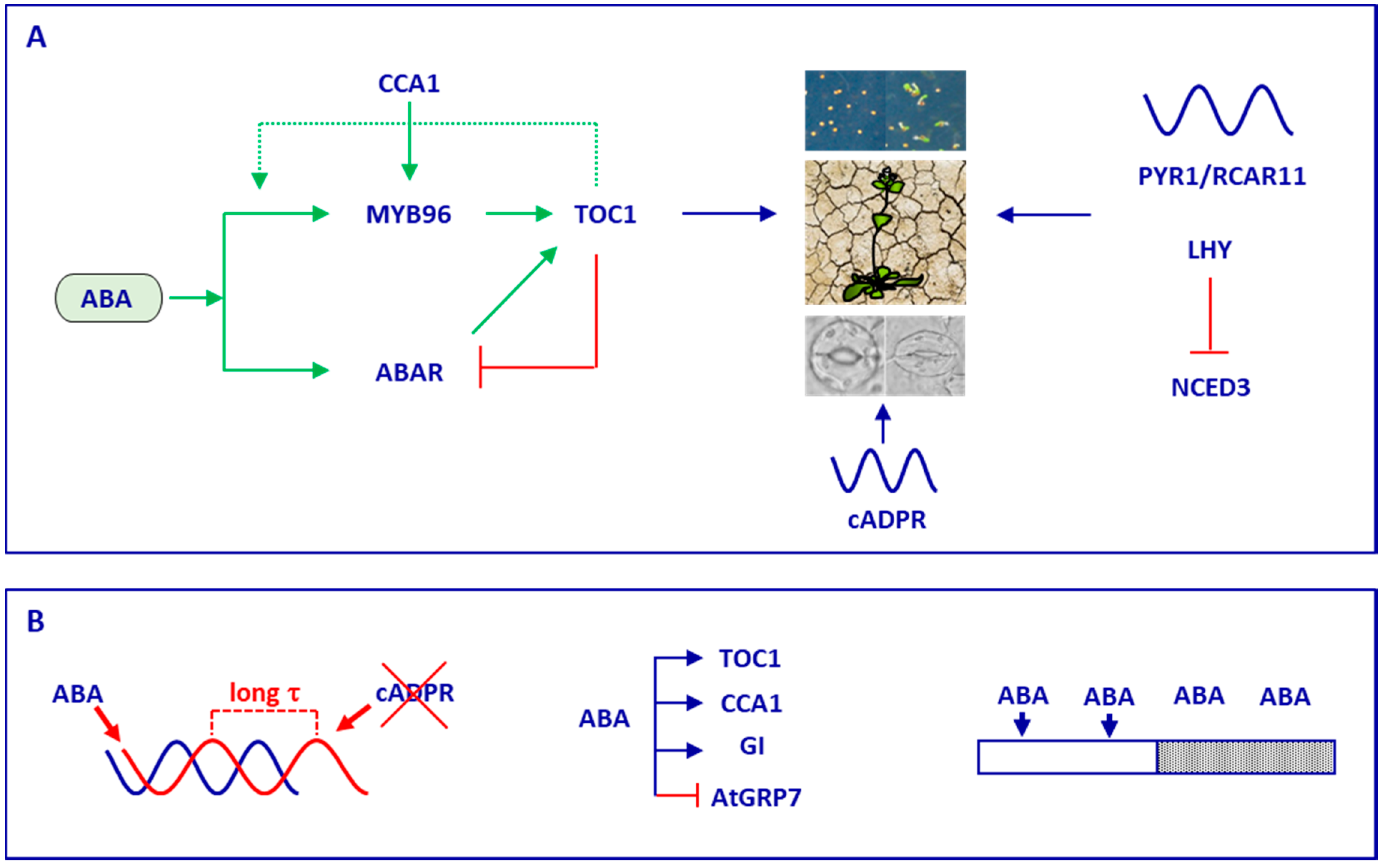 Genes Free Full Text A Functional Connection Between The Weston Ct Wiring Diagram 09 00567 G002