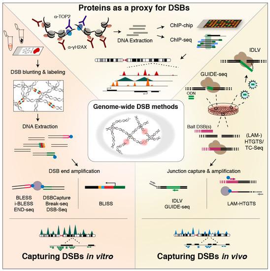 Genes   December 2018 - Browse Articles
