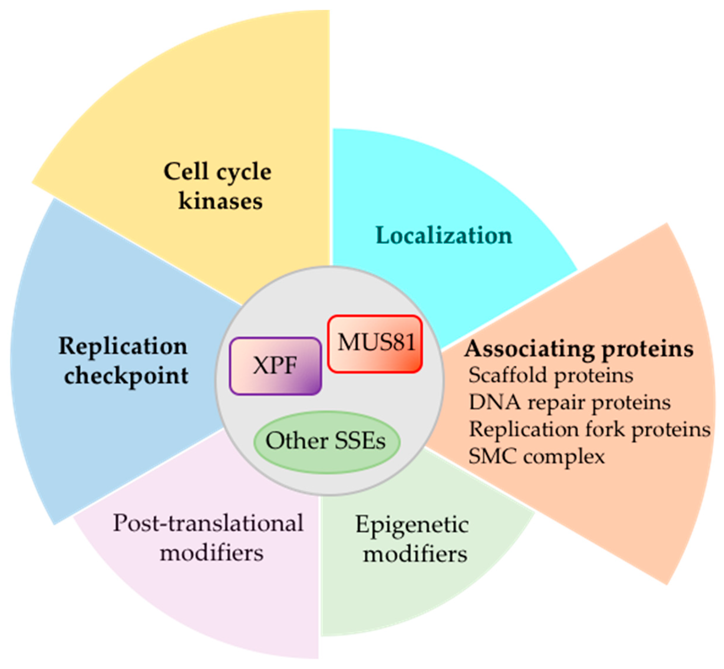 Genes | Free Full-Text | Regulation of Structure-Specific