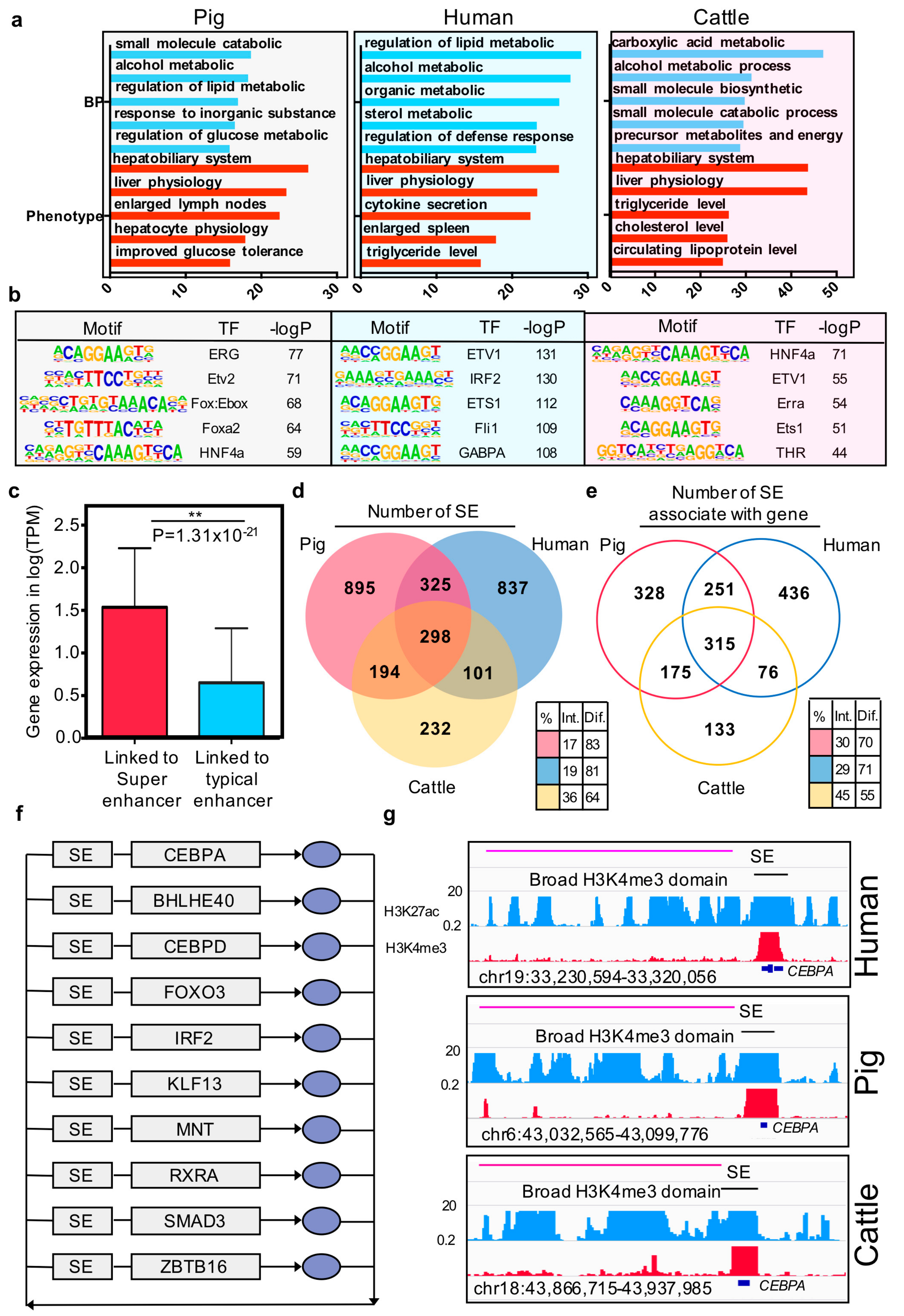 Genes | Free Full-Text | Identification and Conservation
