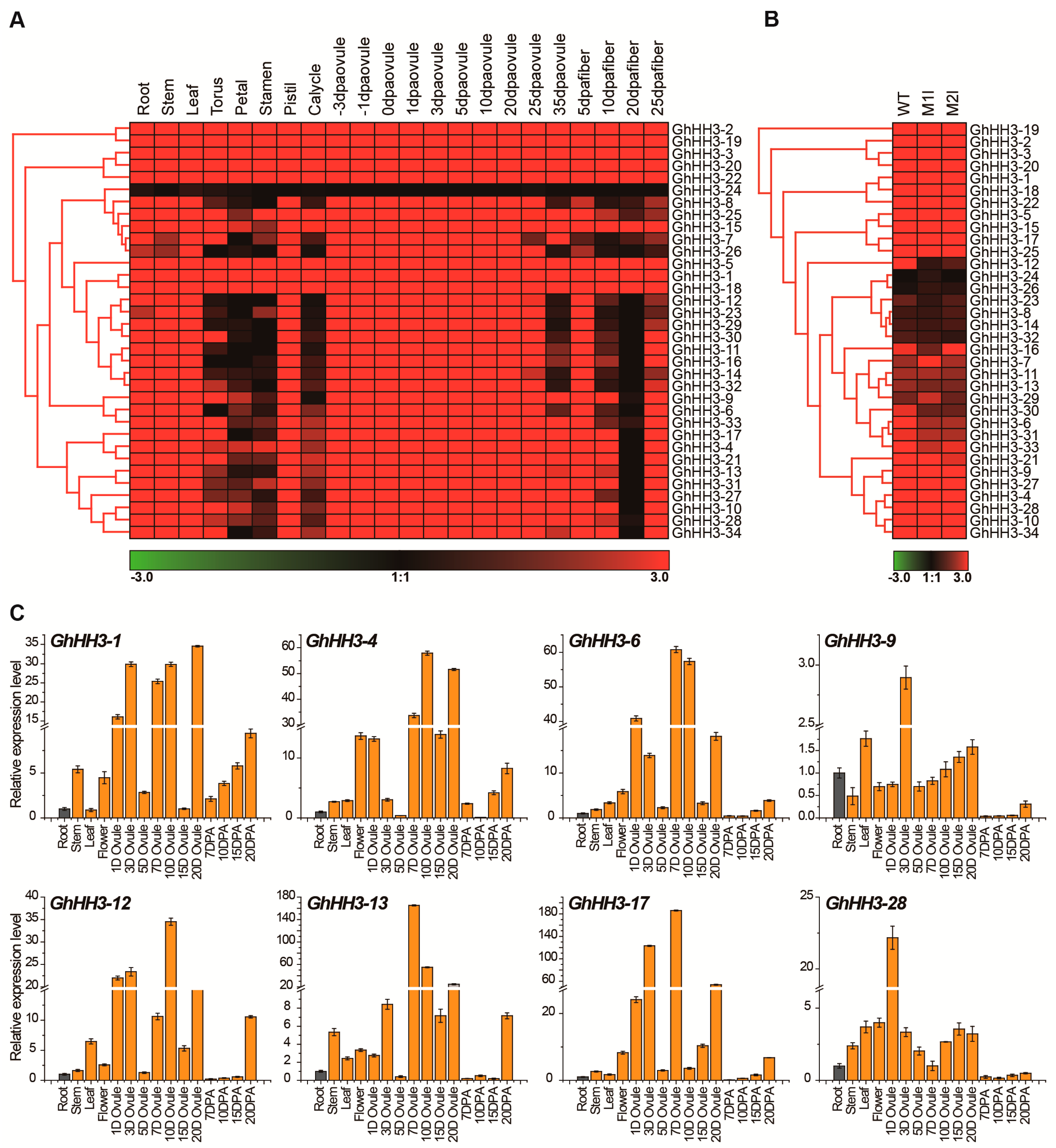 Genes | Free Full-Text | Identification of Histone H3 (HH3