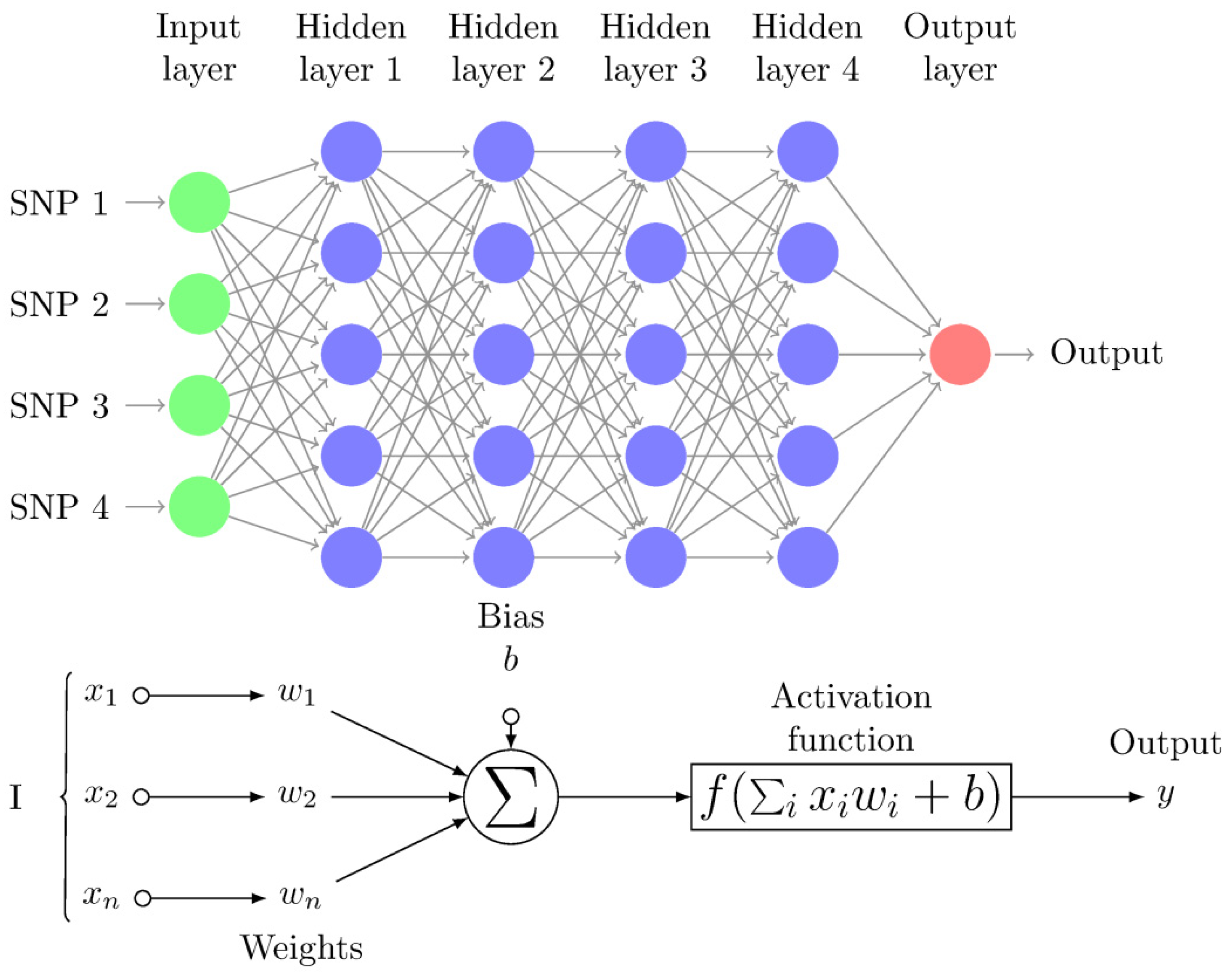 Genes | Free Full-Text | A Guide on Deep Learning for