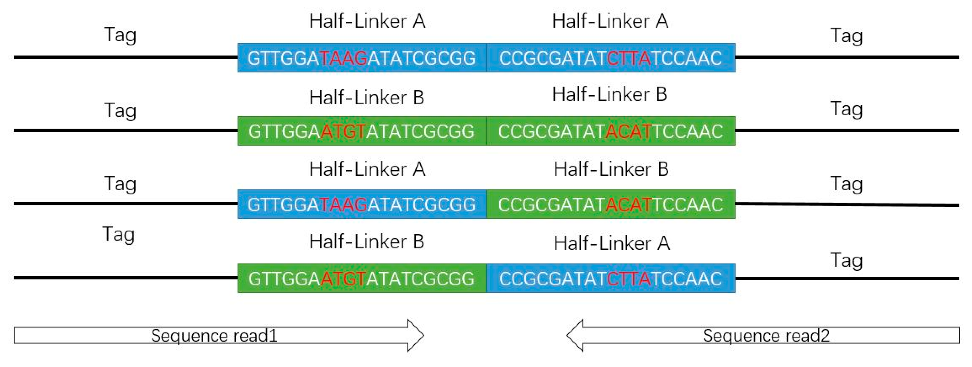 Genes | Free Full-Text | Chromatin Interaction Analysis with Updated
