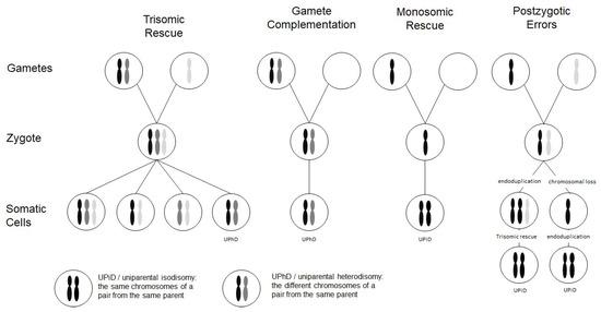 Genes 11 01454 g001 550