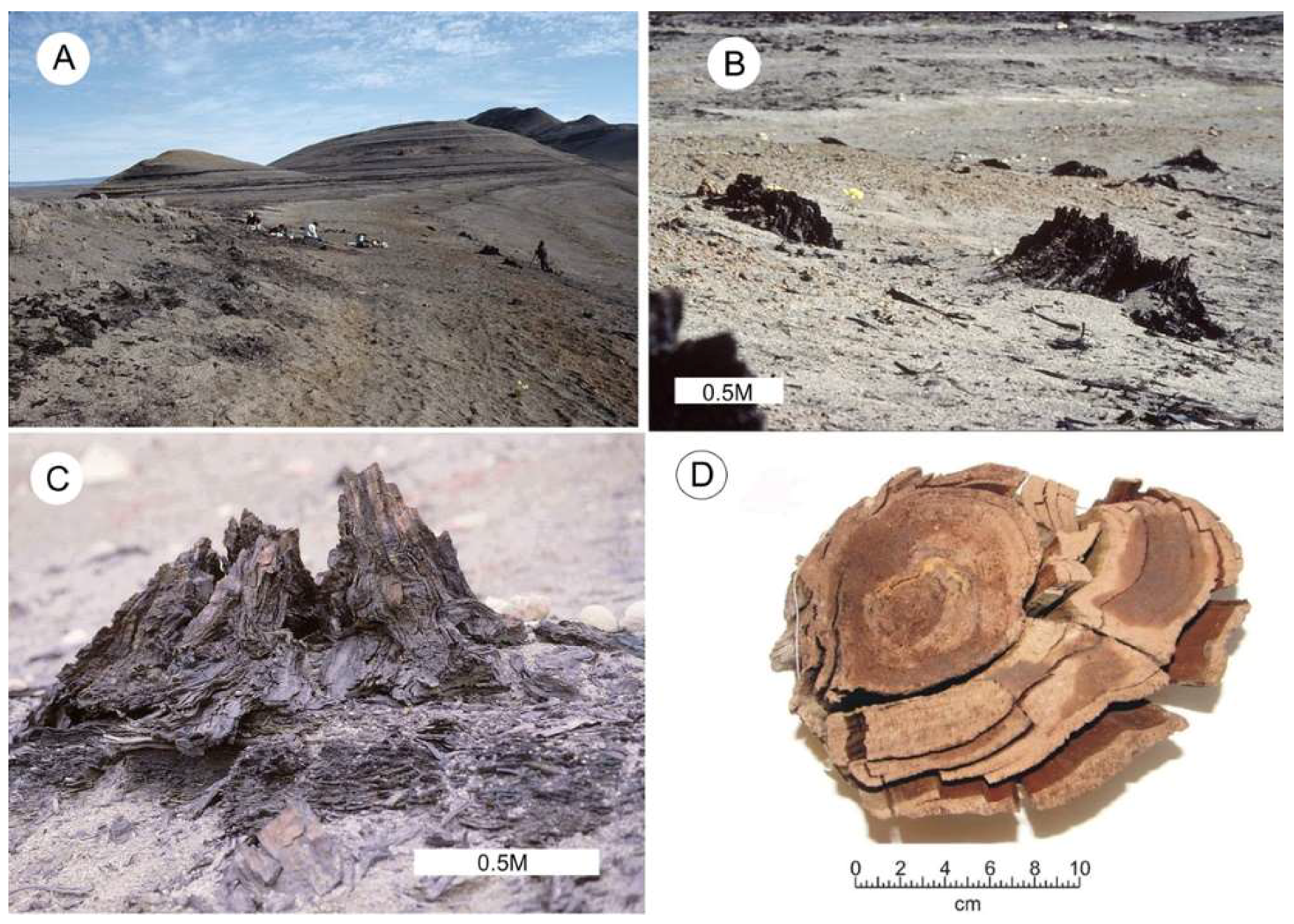 Geosciences | Free Full-Text | Non-Mineralized Fossil Wood