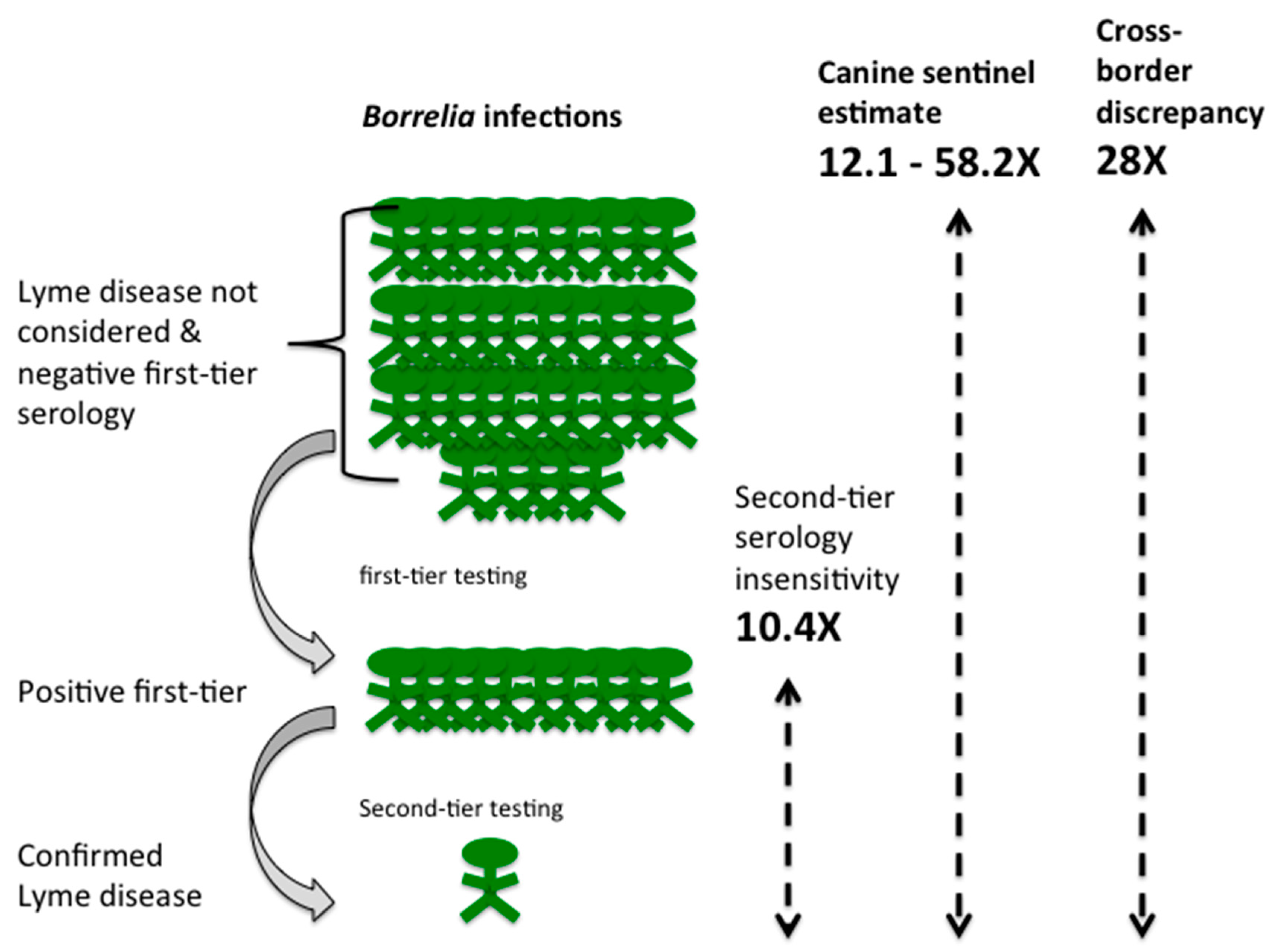 Healthcare | Free Full-Text | Under-Detection of Lyme Disease in Canada