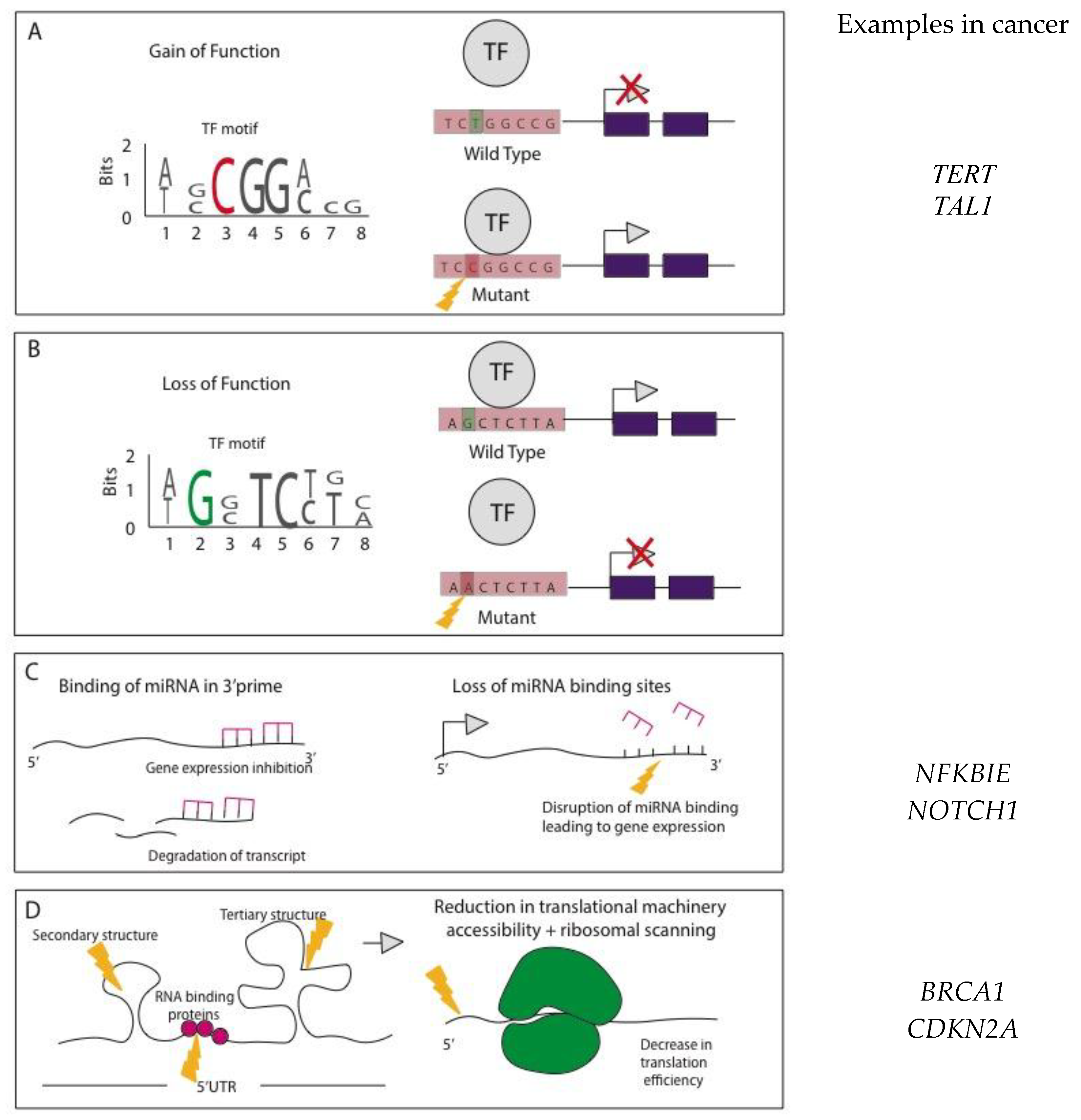 Noncoding Mutations Contribute To >> High Throughput Free Full Text The Identification And