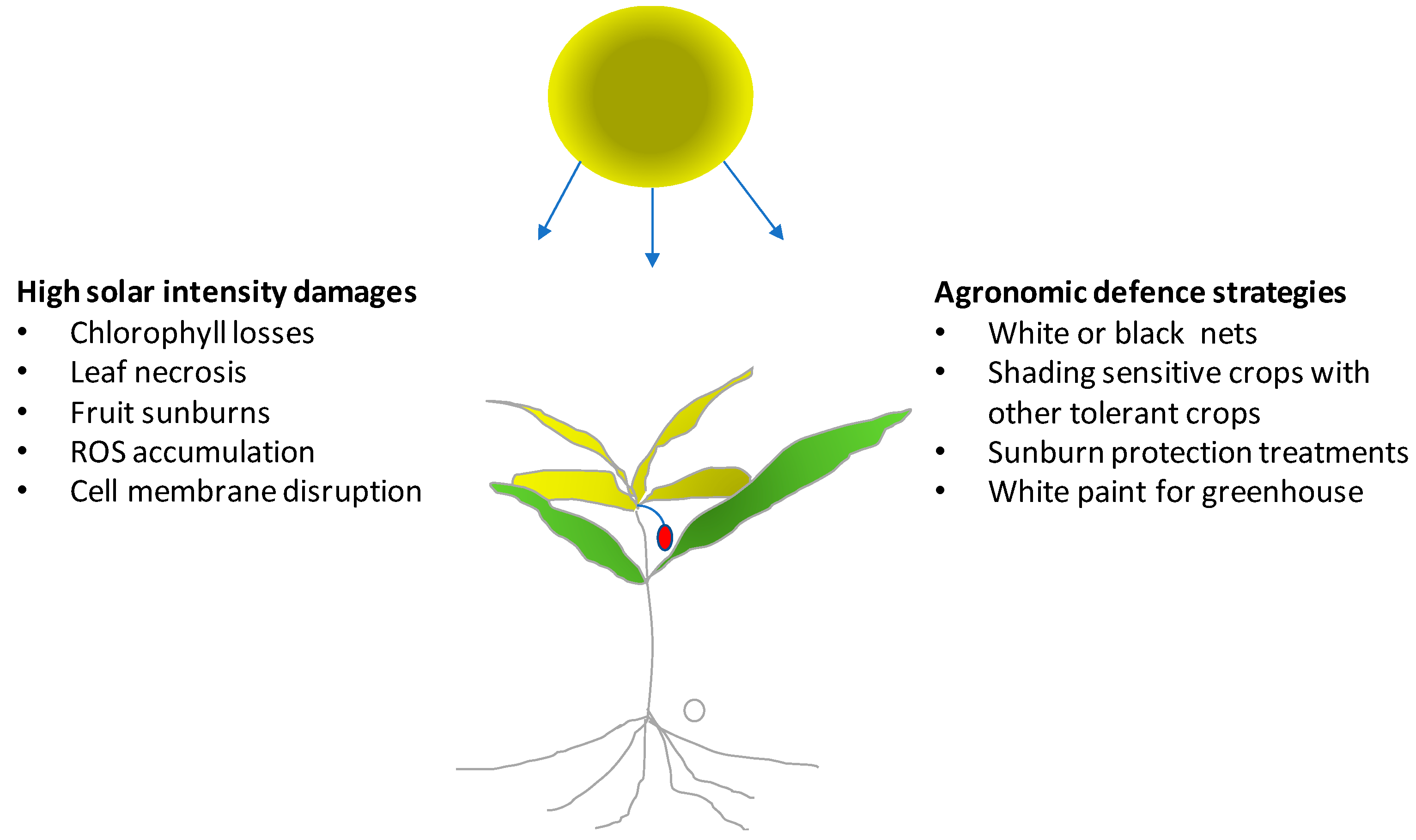 Horticulturae Free Full Text Agronomic Management For Enhancing Plant Tolerance To Abiotic Stresses High And Low Values Of Temperature Light Intensity And Relative Humidity